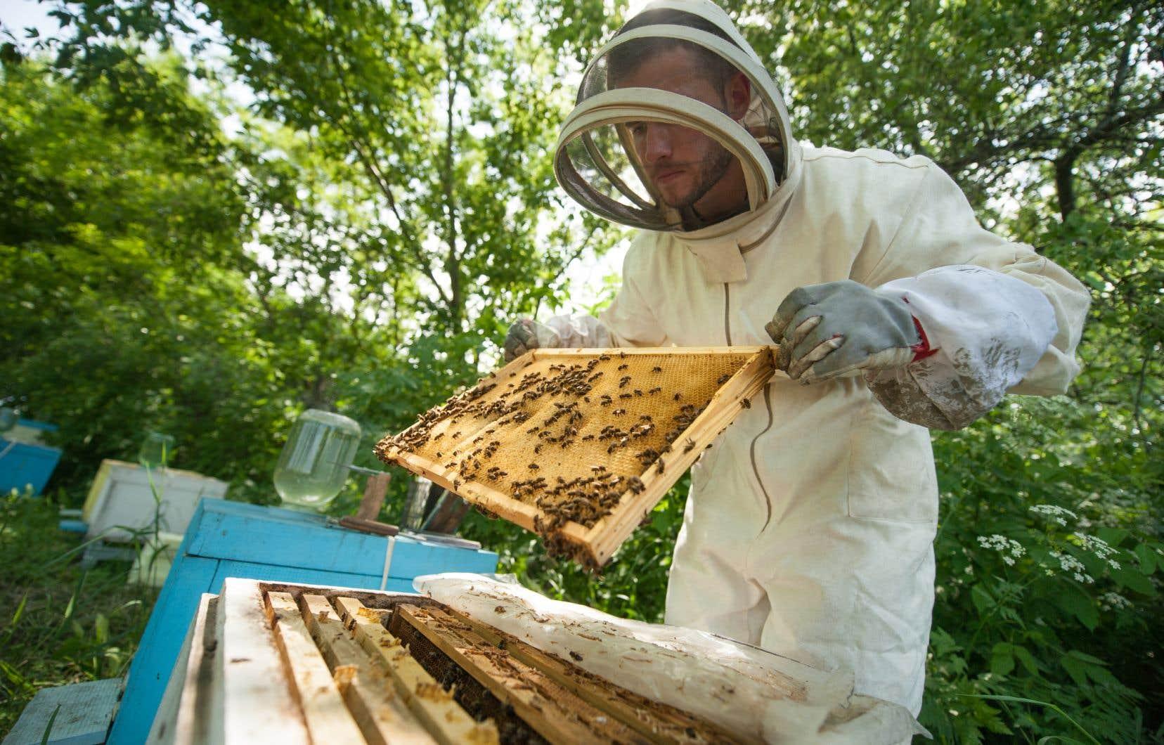 Certains pesticides sont en train de décimer les colonies d'abeilles dans tout le pays, selon des groupes environnementaux.