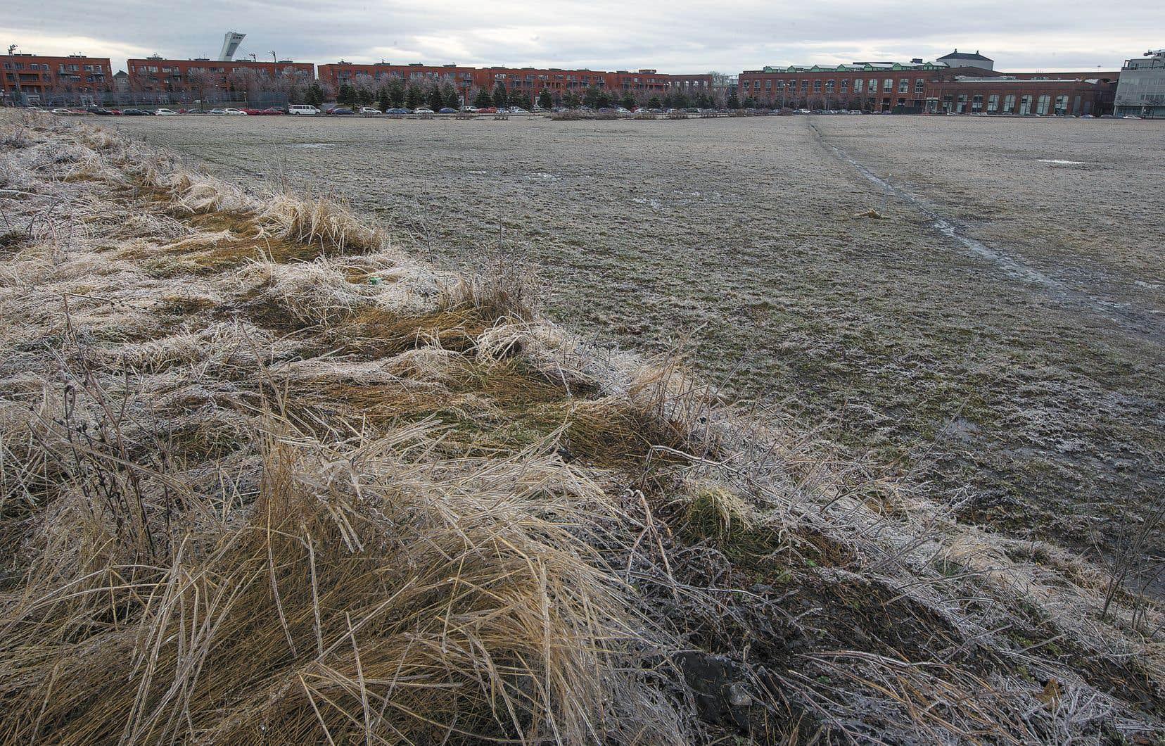 Le terrain sur lequel serait construite l'école du Technopôle Angus à Rosemont.