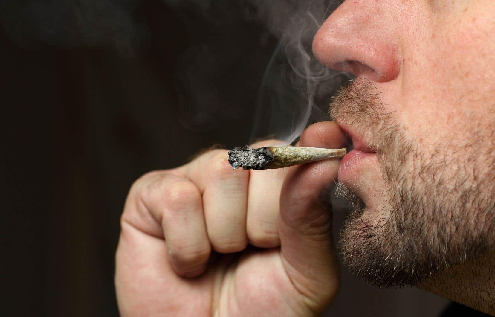 Les propriétaires réfractaires au cannabis pourront-ils l'interdire?