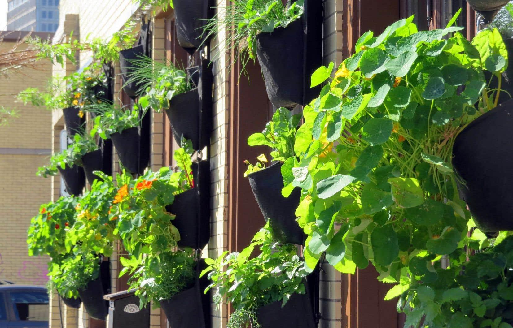 Plante Sur Les Murs comment créer un cocon végétal en utilisant les murs | le devoir