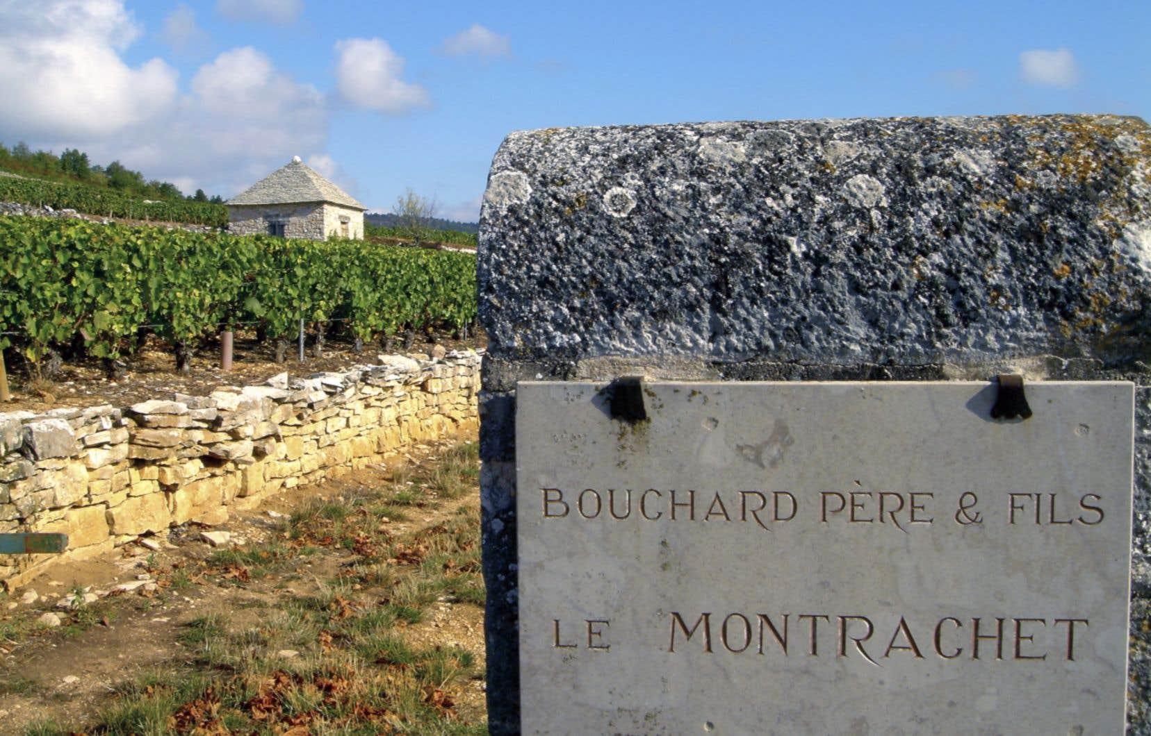 Entre 250 et 270 mètres d'altitude, le chardonnay livre, sur sous-sol argilo-calcaire-cailloutis, le grand Montrachet, un blanc singulier qui laisse bouche bée.