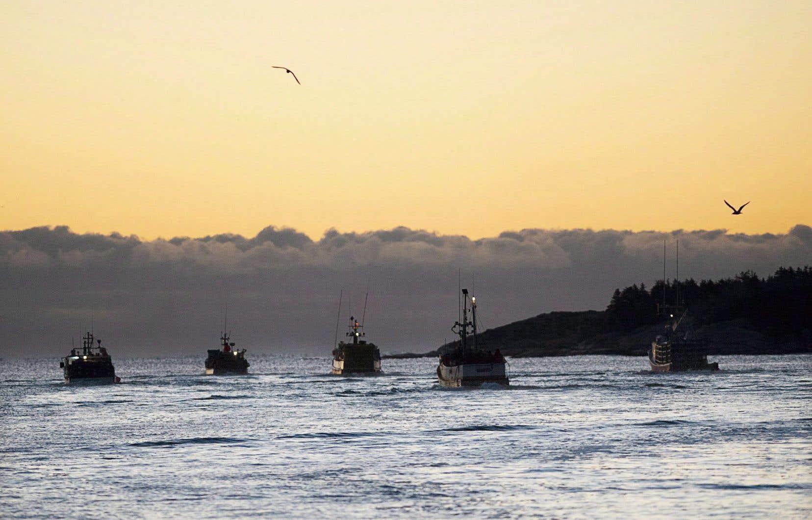 Les pêcheurs de homards pourraient perdre jusqu'à 25% de leurs revenus cette année en raison des importantes mesures de protection des baleines, selon le président de l'Union des pêcheurs, Carl Allen.