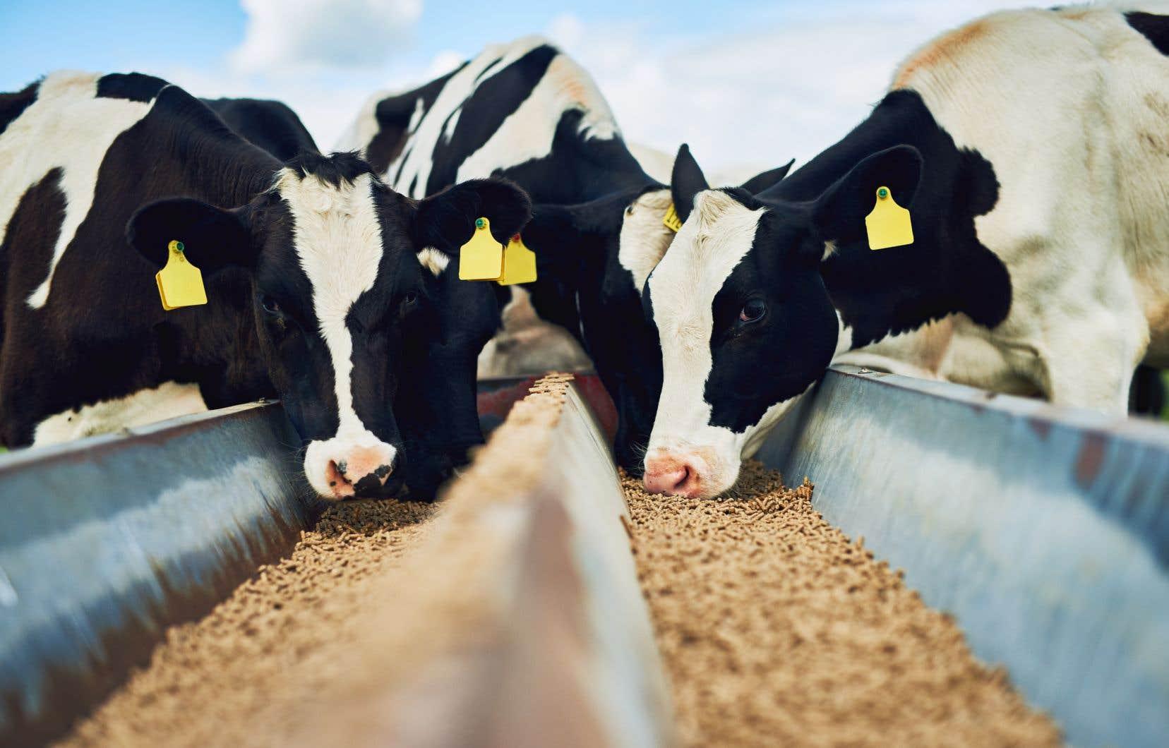 Dans les pays développés, l'objectif de souveraineté alimentaire s'est traduit par différents programmes de gestion de l'offre et par l'allocation de subventions généreuses aux exploitations agricoles, note l'auteur.