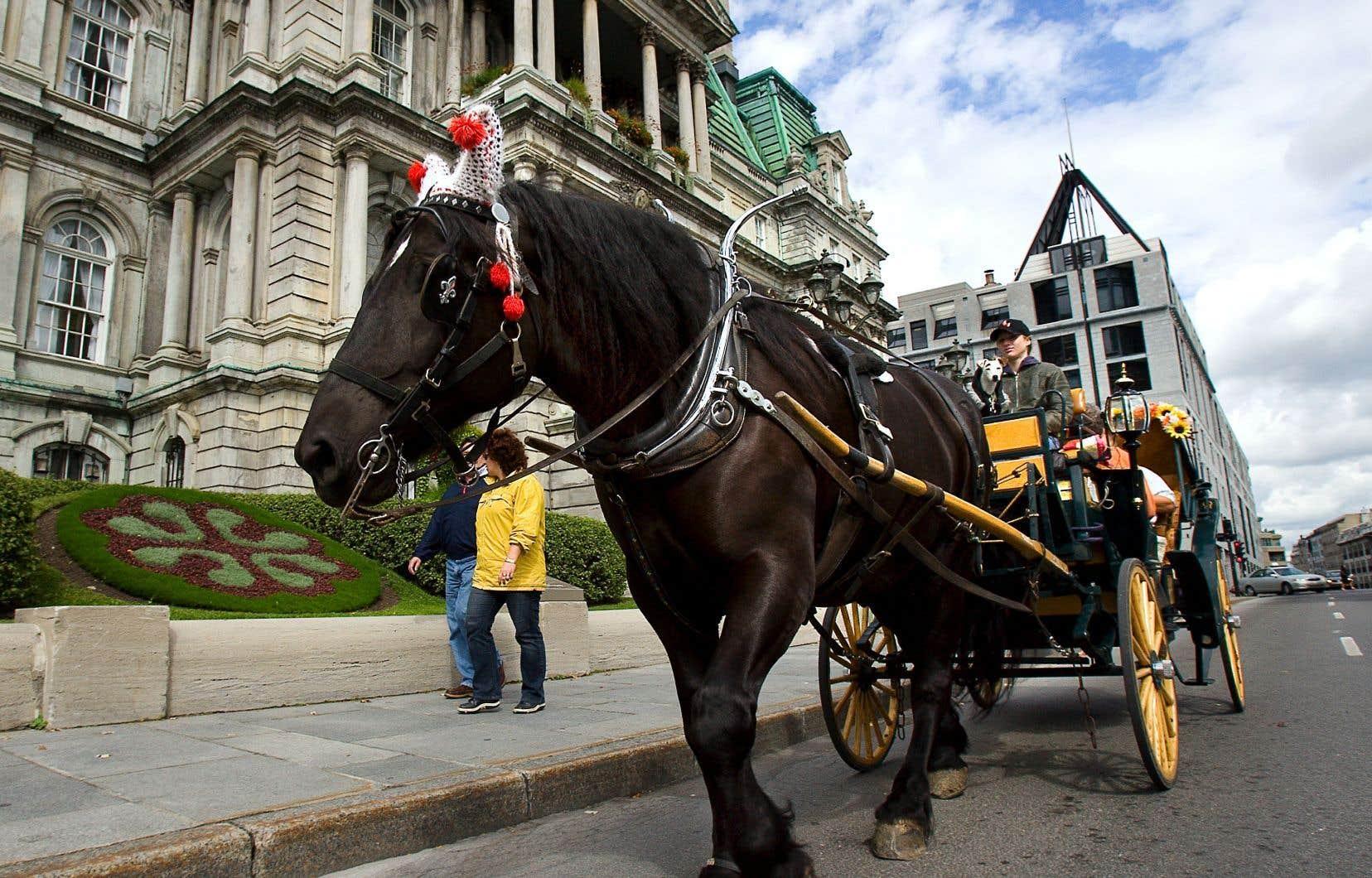 L'administration Plante a décidé de concrétiser une de ses promesses électorales, soit de bannir les calèches des rues de Montréal à compter de 2020.