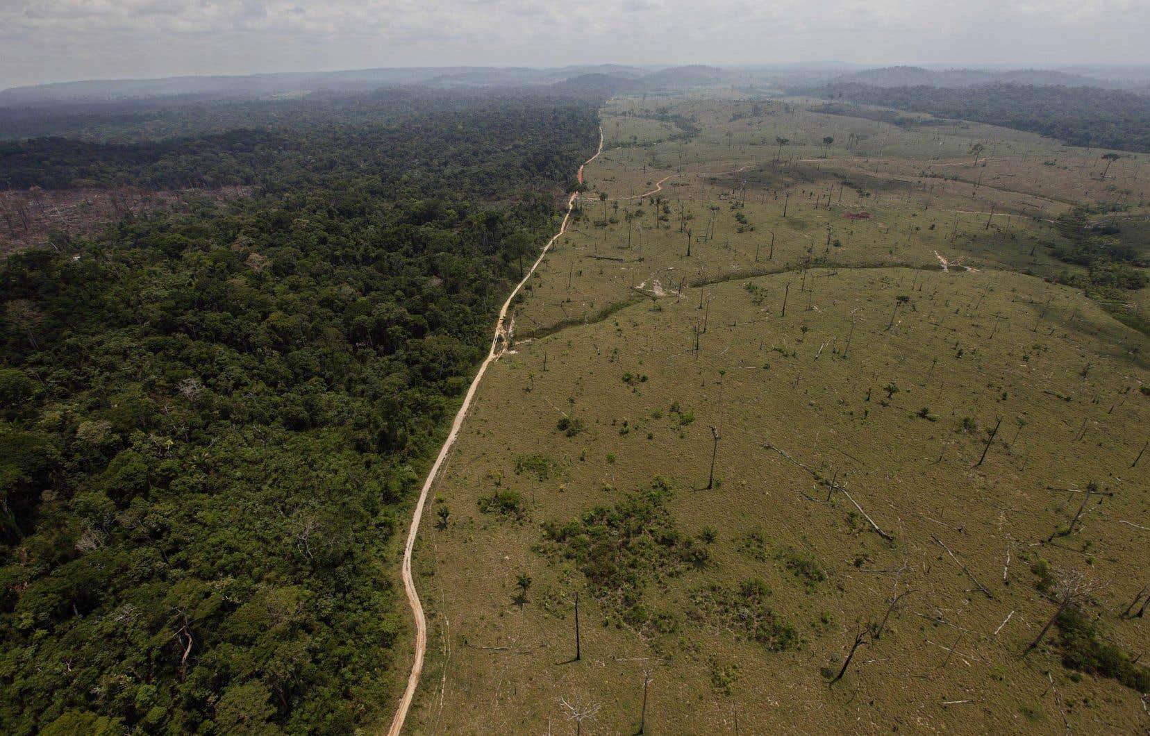 Les forêts primaires jouent un rôle crucial pour la biodiversité ou la qualité de l'air et de l'eau.