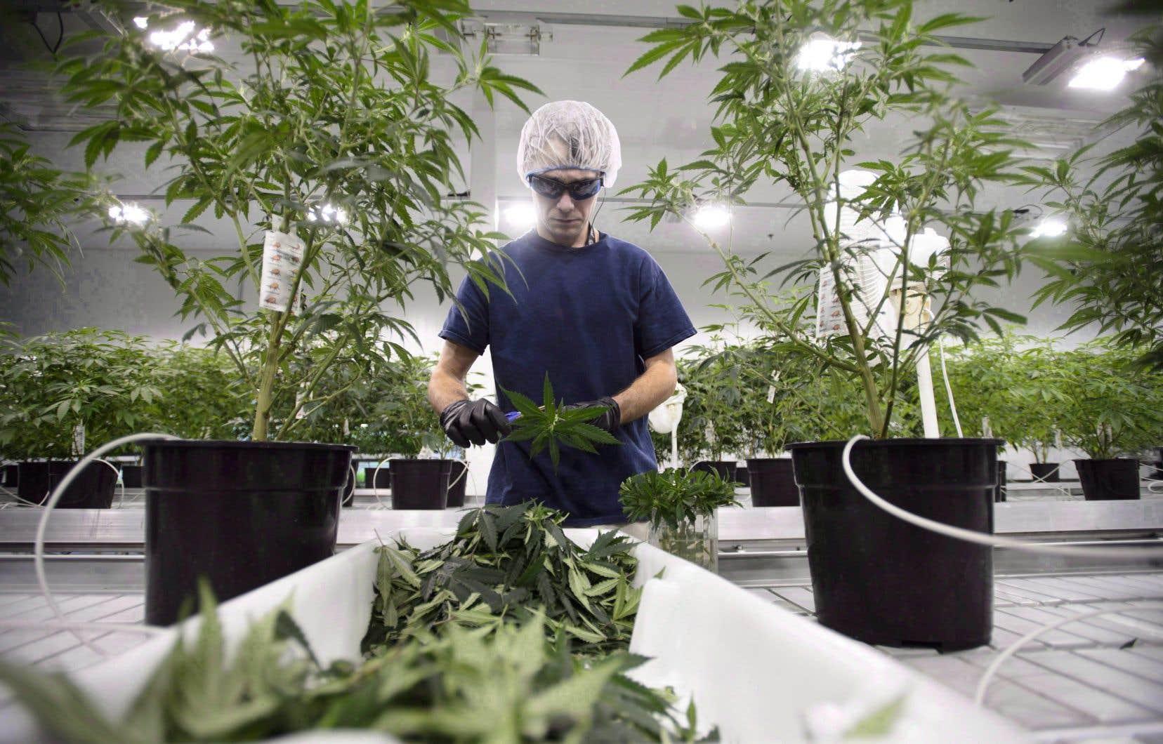 Les Québécois pourront commander du cannabis en utilisant une plateforme en ligne dès le 17octobre.