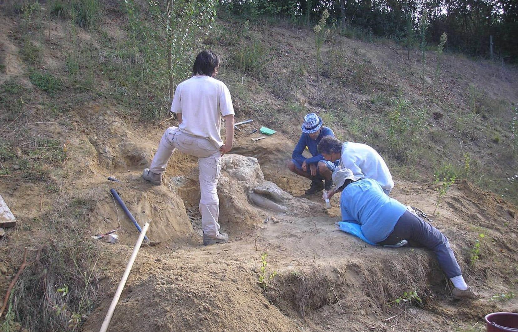 Ce spécimen fait partie du groupe des proboscidiens et de la famille des gomphotherium, disparus il y a environ 1,5million d'années.