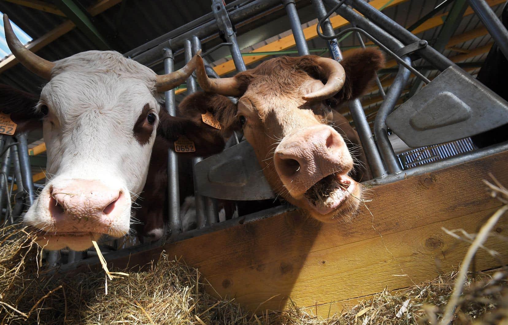 «De nombreuses mesures ont été mises en place au cours des 50 dernières années pour favoriser une utilisation judicieuse des antibiotiques chez les animaux d'élevage», selon l'auteure.