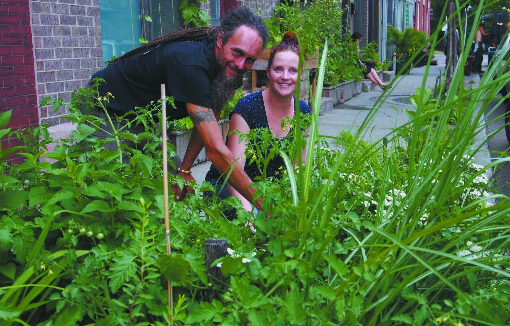 Les bûcherons de l'asphalte comptent déjà plus de 1000 participants dans l'est de Montréal, qui, une plante à la fois, transforment leur milieu.