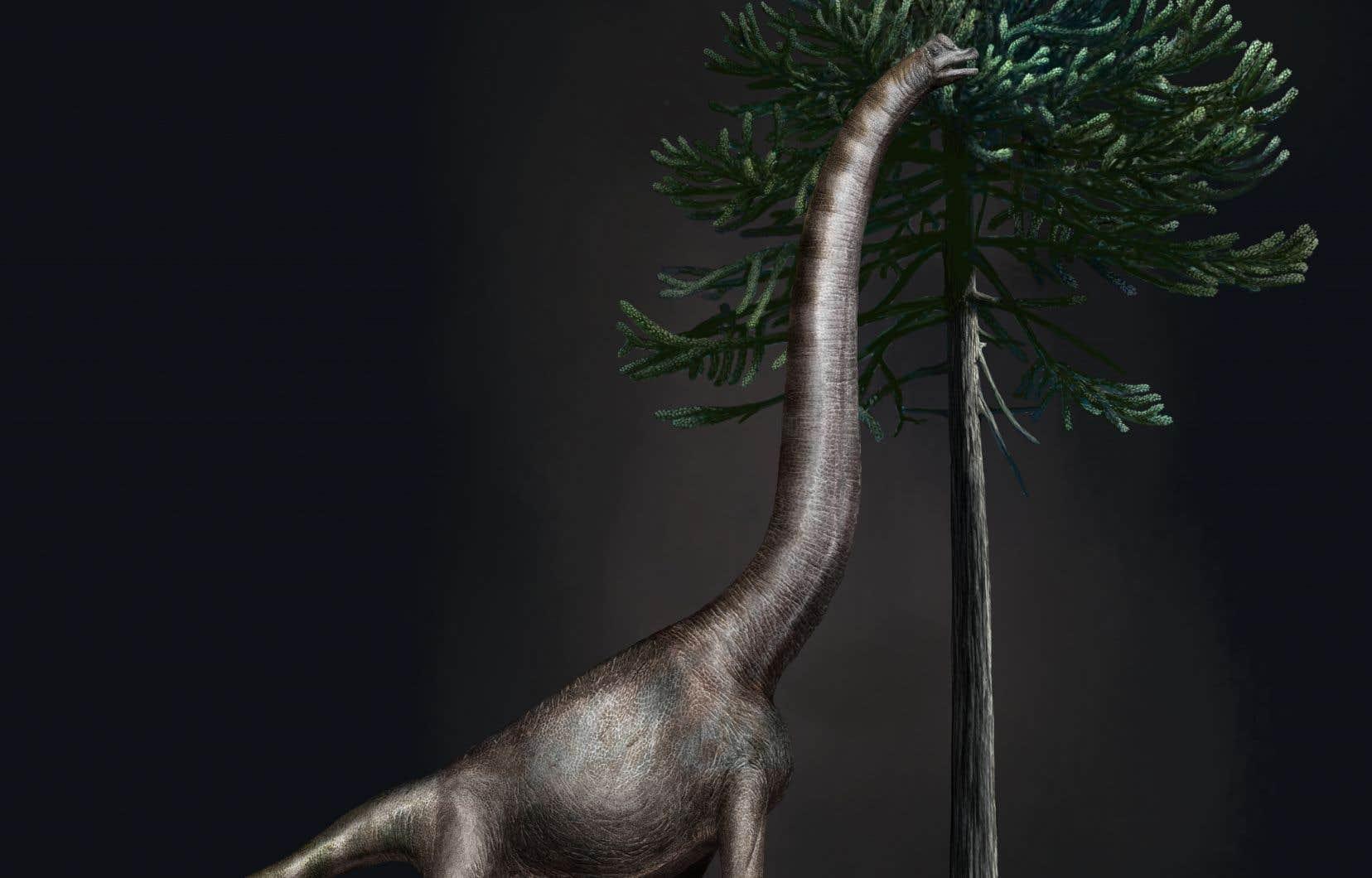 <p>S'il ne s'agit pas du plus grand dinosaure jamais mis au jour, c'est néanmoins la plus grande empreinte jamais répertoriée, selon les scientifiques.</p>
