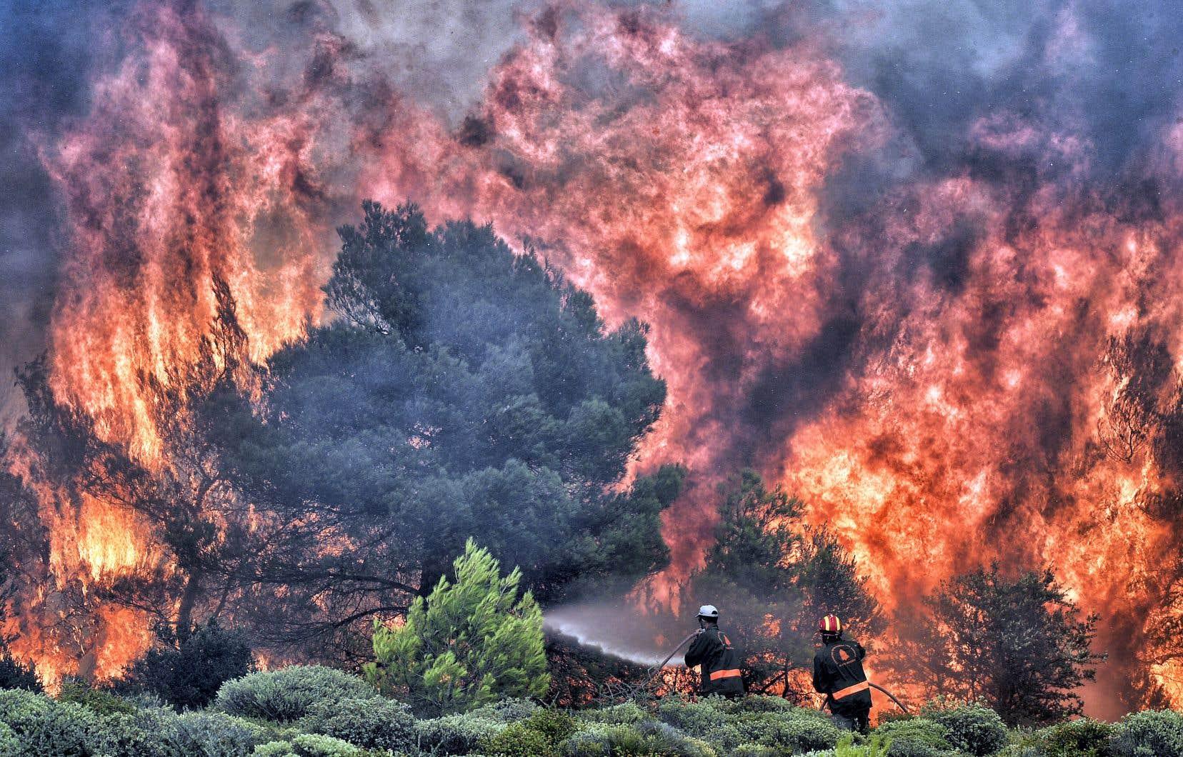 Des pompiers tentaient mardi d'éteindre un feu de forêt près du village de Kineta, près d'Athènes, en Grèce.