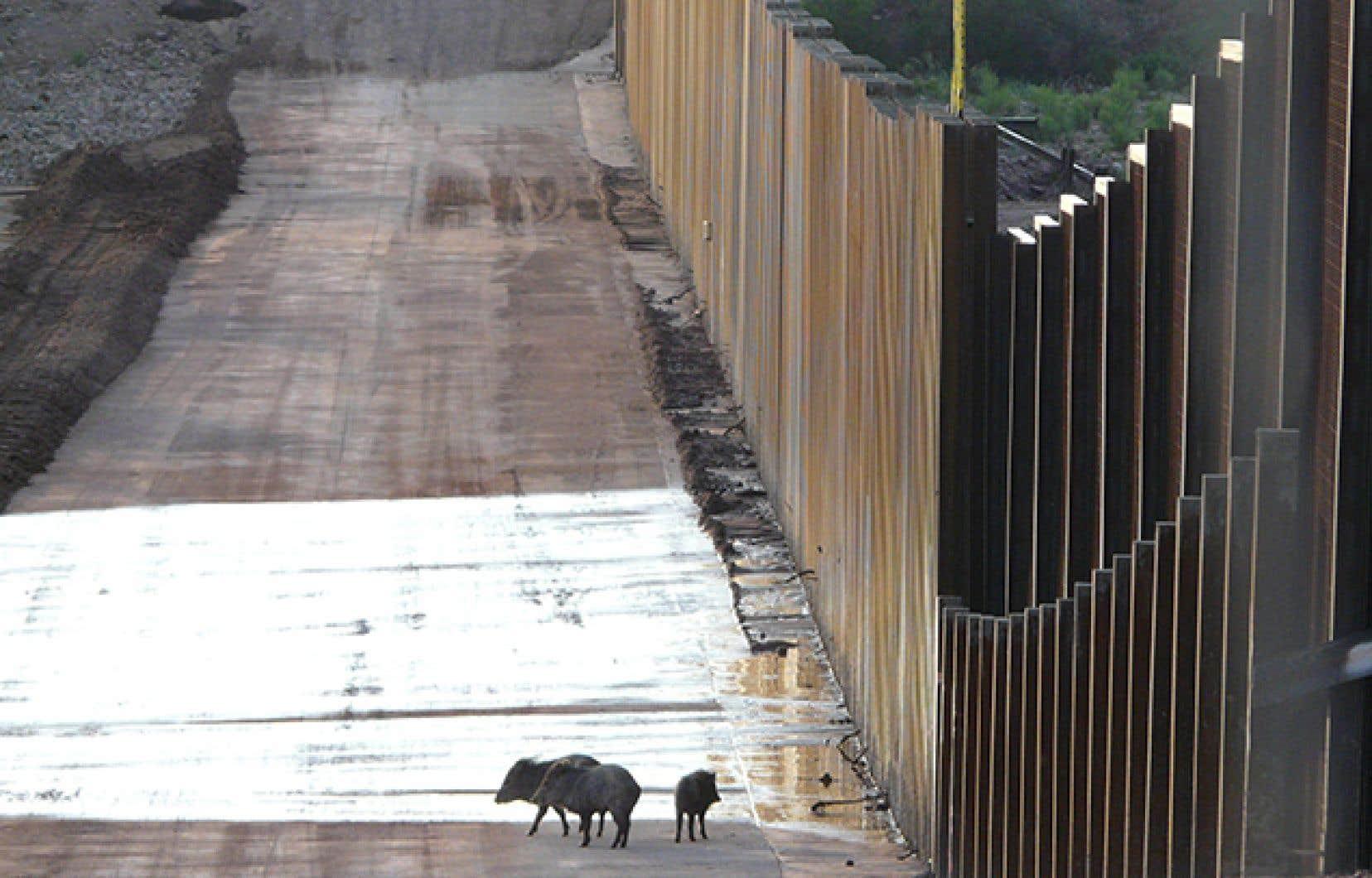 Le mur entre les États-Unis et le Mexique constitue aussi une barrière pour les espèces animales.