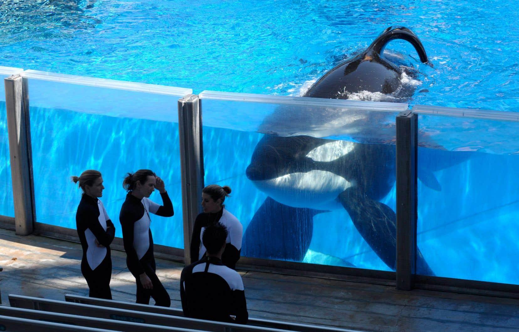 Fondé en 1959 aux États-Unis, SeaWorld Entertainment a vu sa réputation entachée par plusieurs scandales et l'opposition farouche d'organisations environnementales.