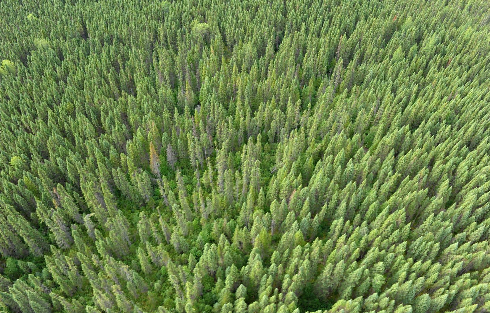 Si l'humanité adoptait le mode de vie canadien, il faudrait plus de 4,7 planètes Terre pour suffire à la demande en ressources, mais aussi pour absorber l'ensemble de nos émissions de gaz à effet de serre.