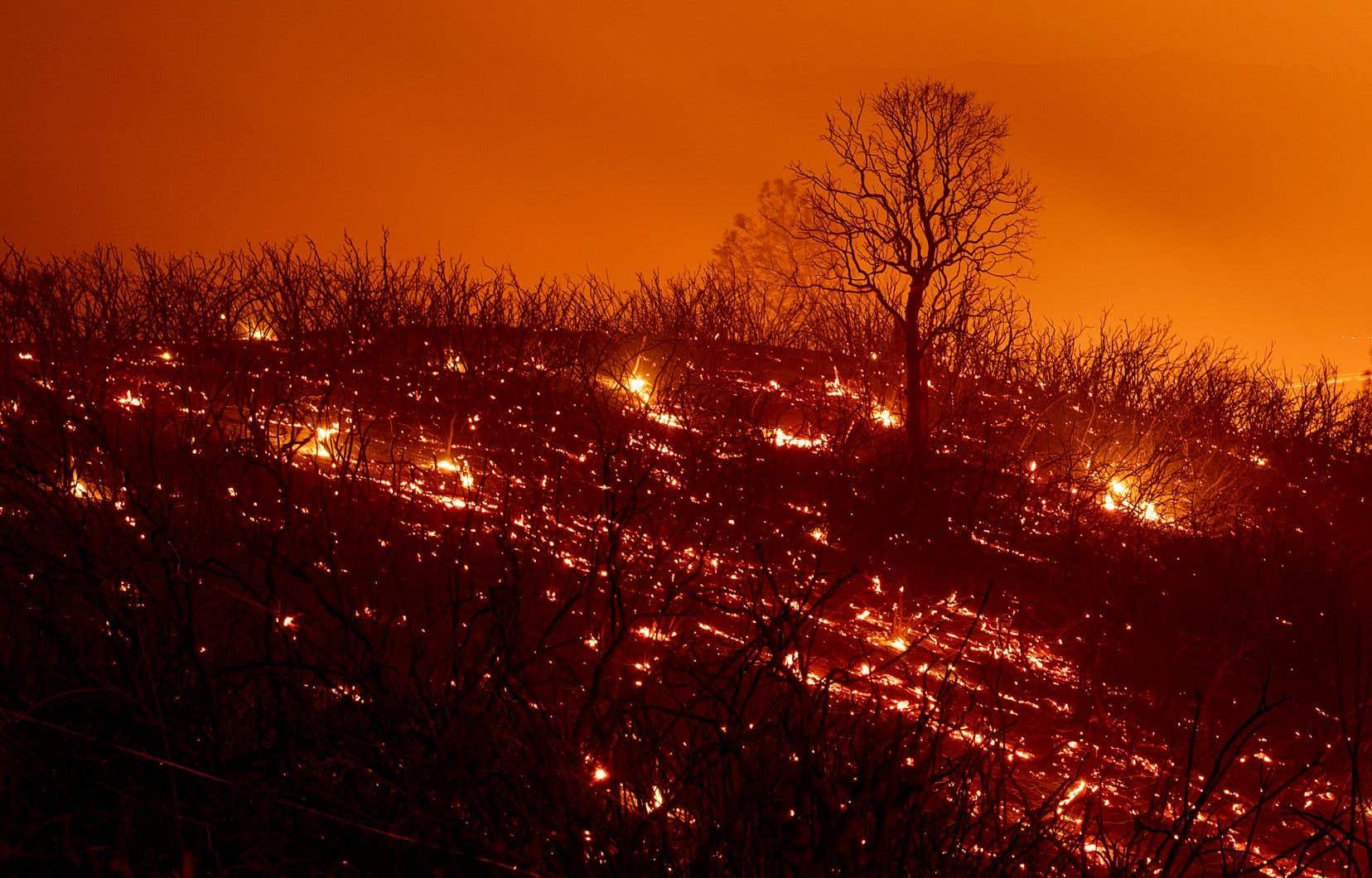 Bien que plus étendu, l'incendie du Mendocino Complex n'est pas aussi destructeur que l'incendie «Carr», qui sévit dans le nord de la Californie.