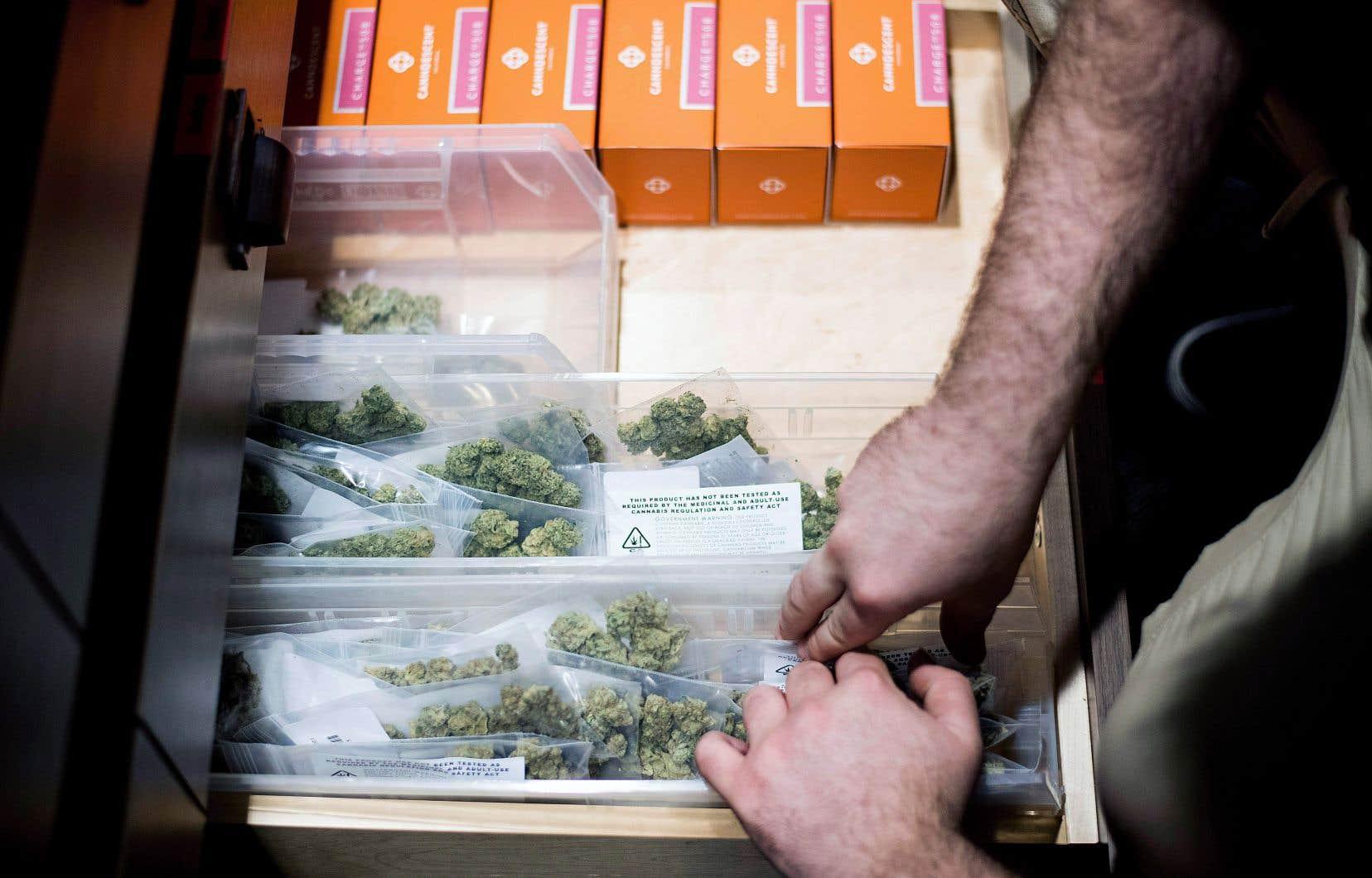Devant la légalisation du cannabis et la croissance de son usage annoncées, le monde du travail est concerné au premier chef.