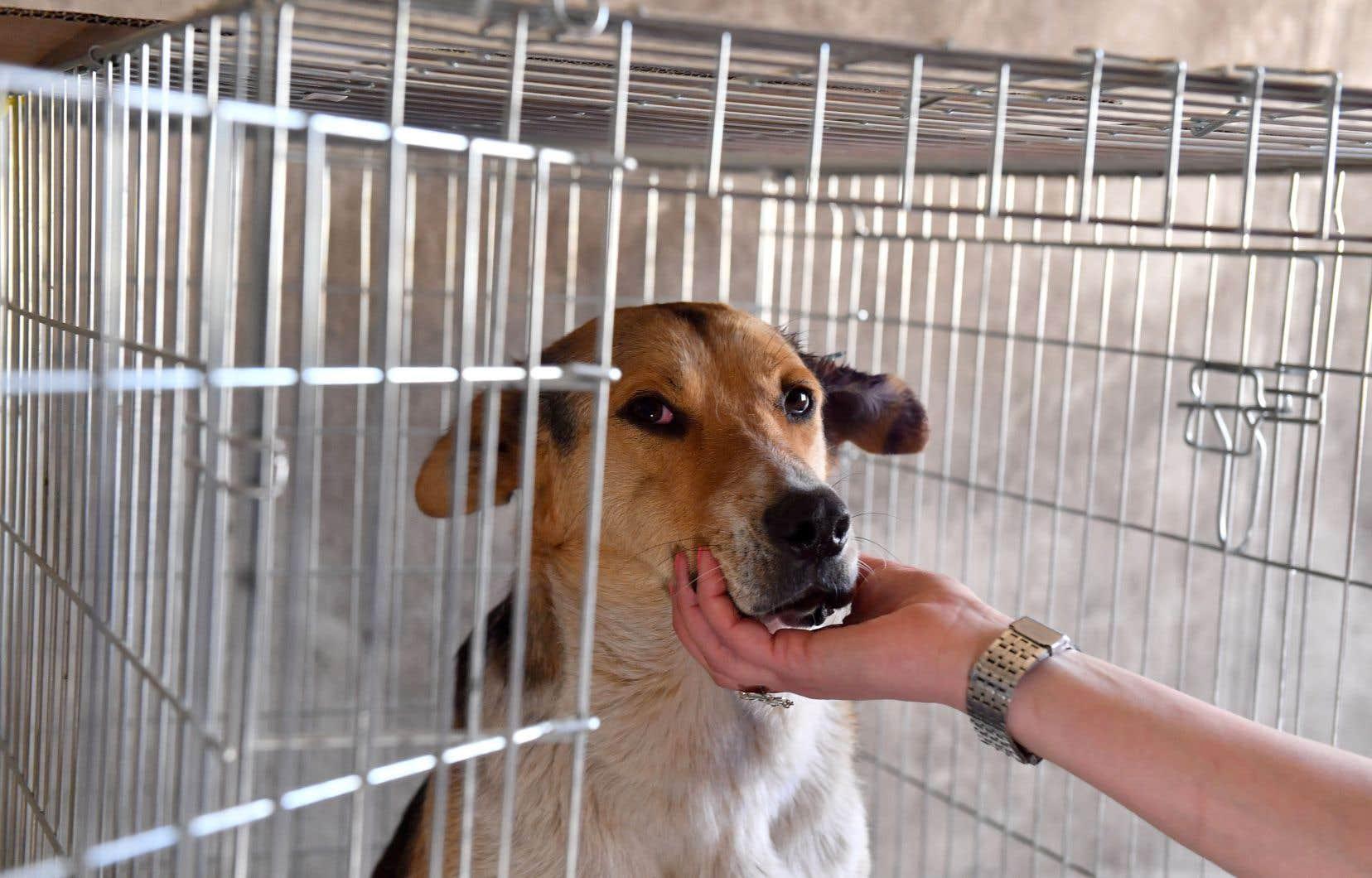 Valérie Plante soutient que la nouvelle réglementation en appellera à la responsabilisation des propriétaires de tous les types d'animaux.
