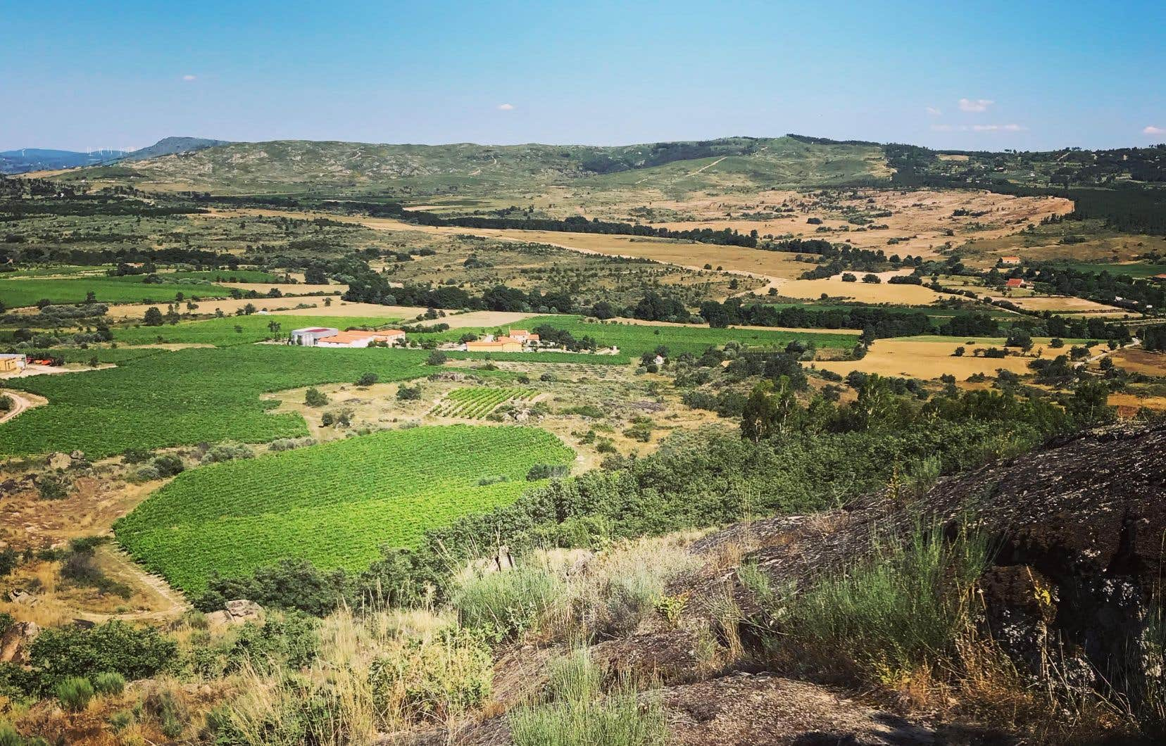 Beira Interior: «La fraîcheur des montagnes». C'est le credo de cette vaste région située au sud du fleuve Douro, une région contrastée par des nuits fraîches et des journées torrides qui assurent, dans ce coin de pays encastré, une vivacité inhabituelle aux vins. Ici, vignobles à la Quinta Dos Thermos.