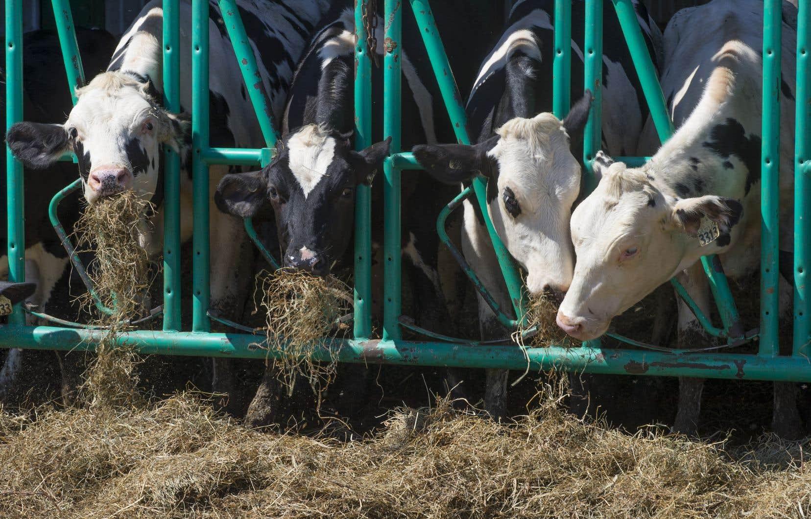 La gestion de l'offre, qui contrôle strictement la production, couvre cinq secteurs: le lait, les dindons, le poulet, les oeufs d'incubation et les oeufs de consommation.