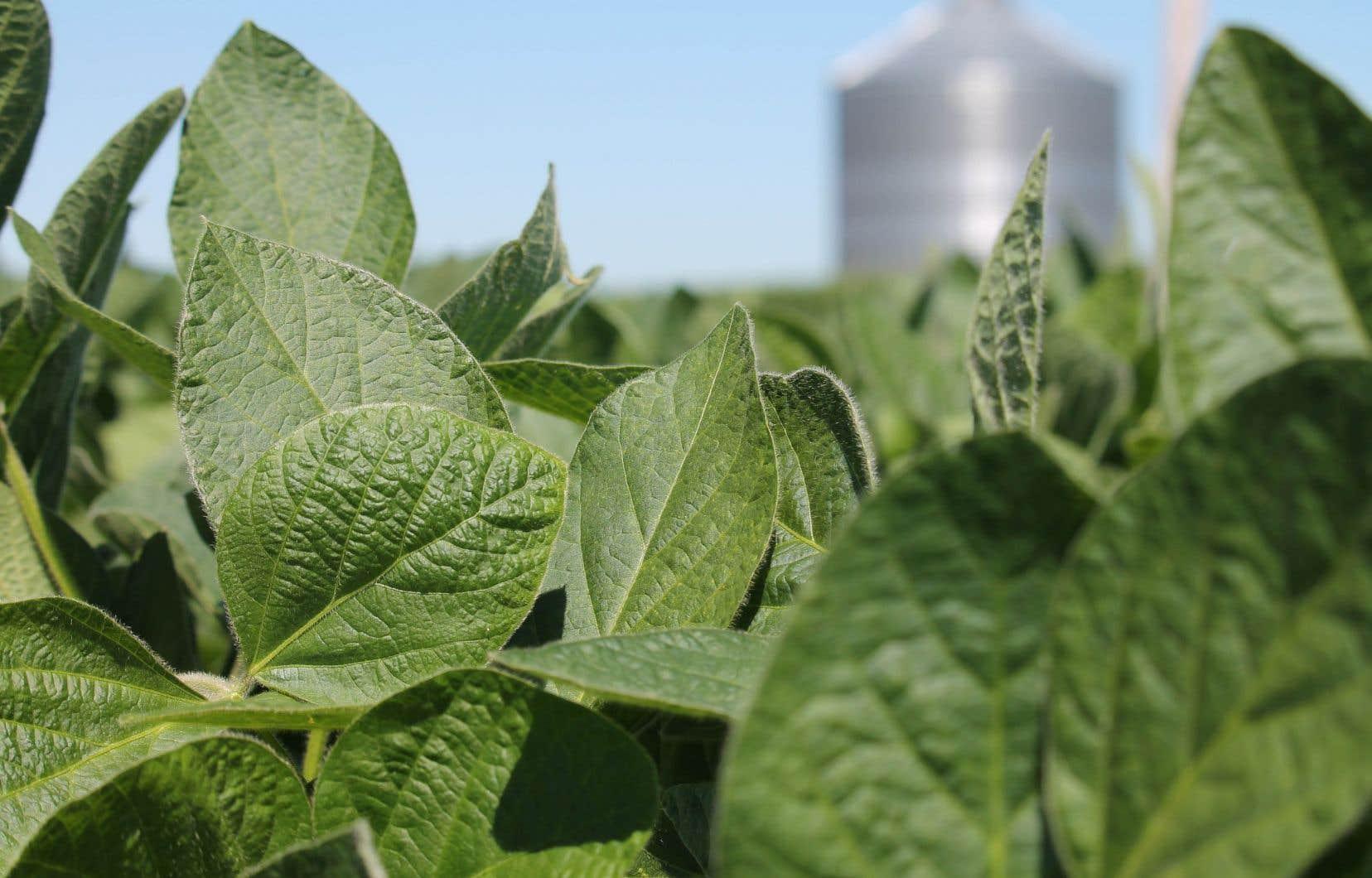 Le Québec compte de 6000 à 7000 producteurs de soya.