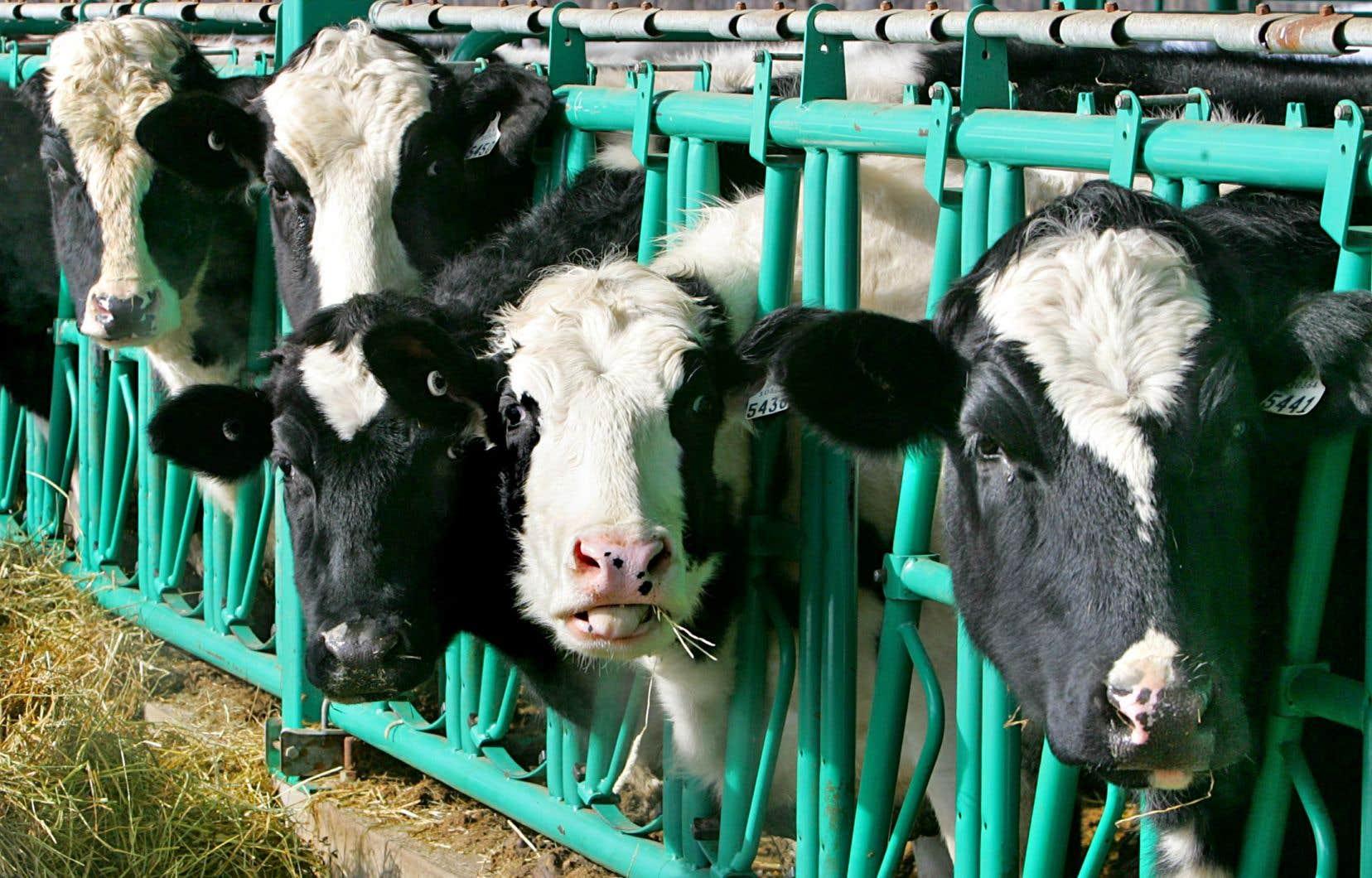 Le président Trump souhaite que le Canada abandonne son accord sur les prix, conclu il y a deux ans, qui limite les exportations américaines de lait ultrafiltré.