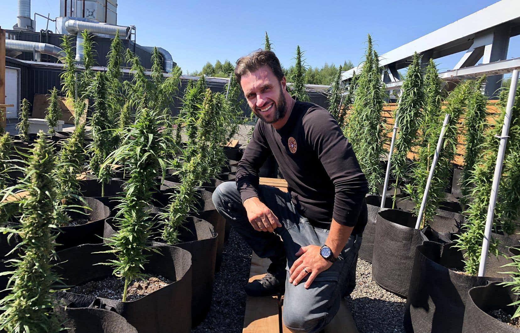 Dany Lefebvre fait pousser des plants de marijuana non psychotrope.