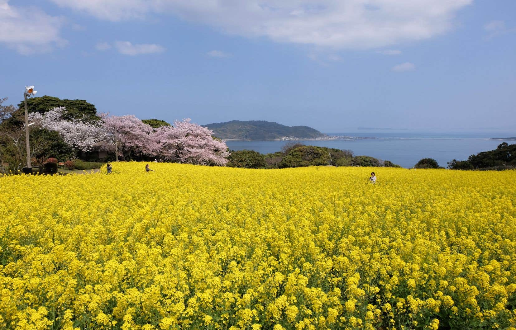 Par beau temps, une petite excursion sur l'île de Nokonoshima s'impose. Dix minutes de traversier, et comme par magie, nous voilà en pleine campagne.