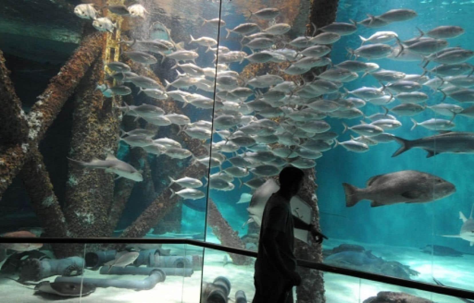 L'Aquarium des Amériques de l'Institut Nature Audubon de La Nouvelle-Orléans présente une saisissante reconstitution de la vie sous-marine qui prospère «normalement» autour d'une plate-forme pétrolière sise au large des côtes de la Louisiane.