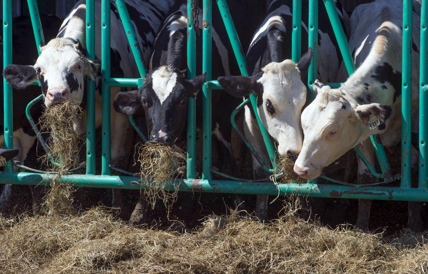 Le premier ministre a assuré aux producteurs laitiers qu'ils seraient indemnisés pour la part de marché que son gouvernement a cédée aux Américains en signant l'Accord États-Unis–Mexique–Canada.