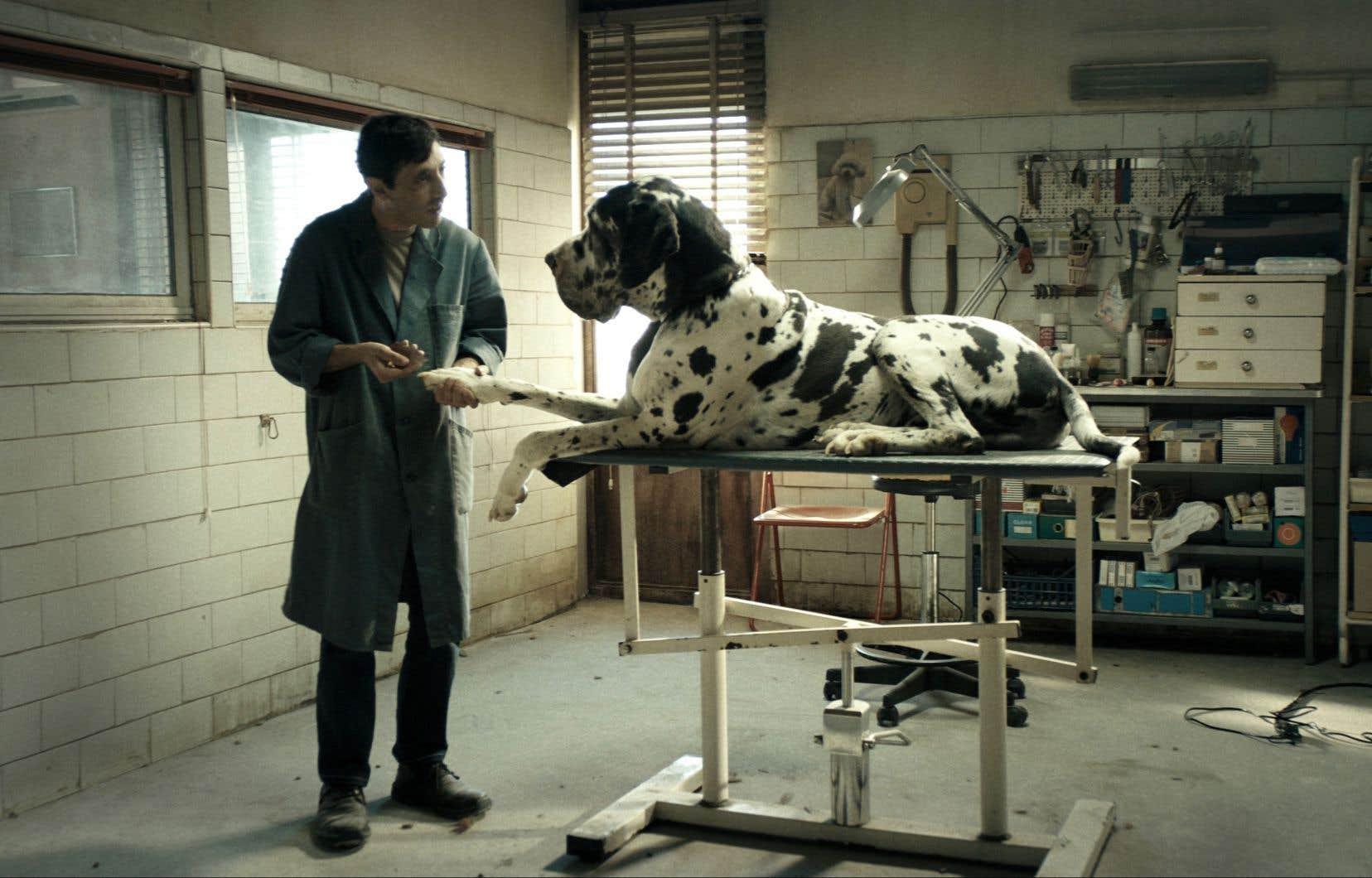 Marcello Fonte dans une scène du film «Dogman»