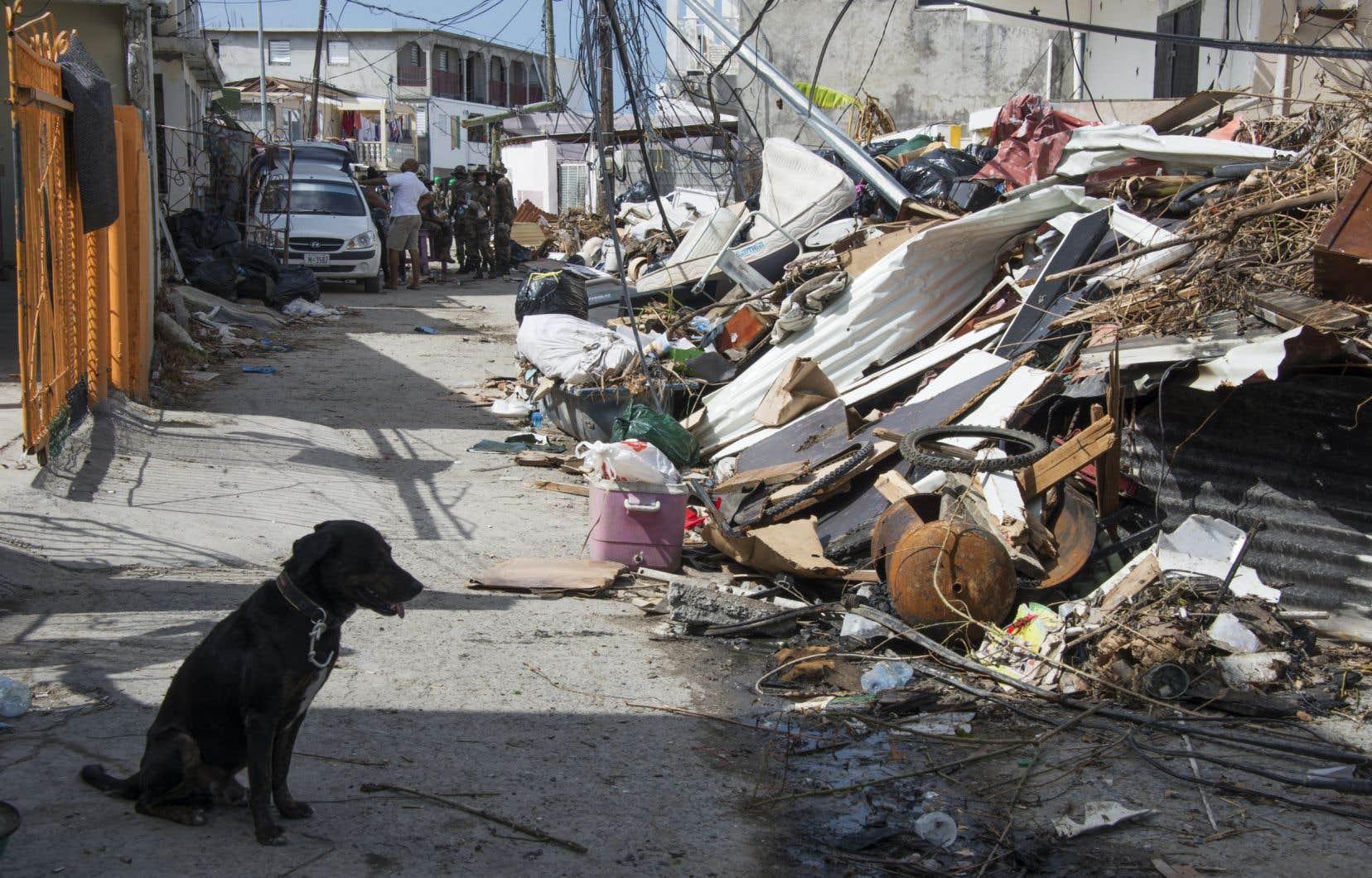 Les pertes causées par les catastrophes naturelles ont explosé depuis 20 ans Image