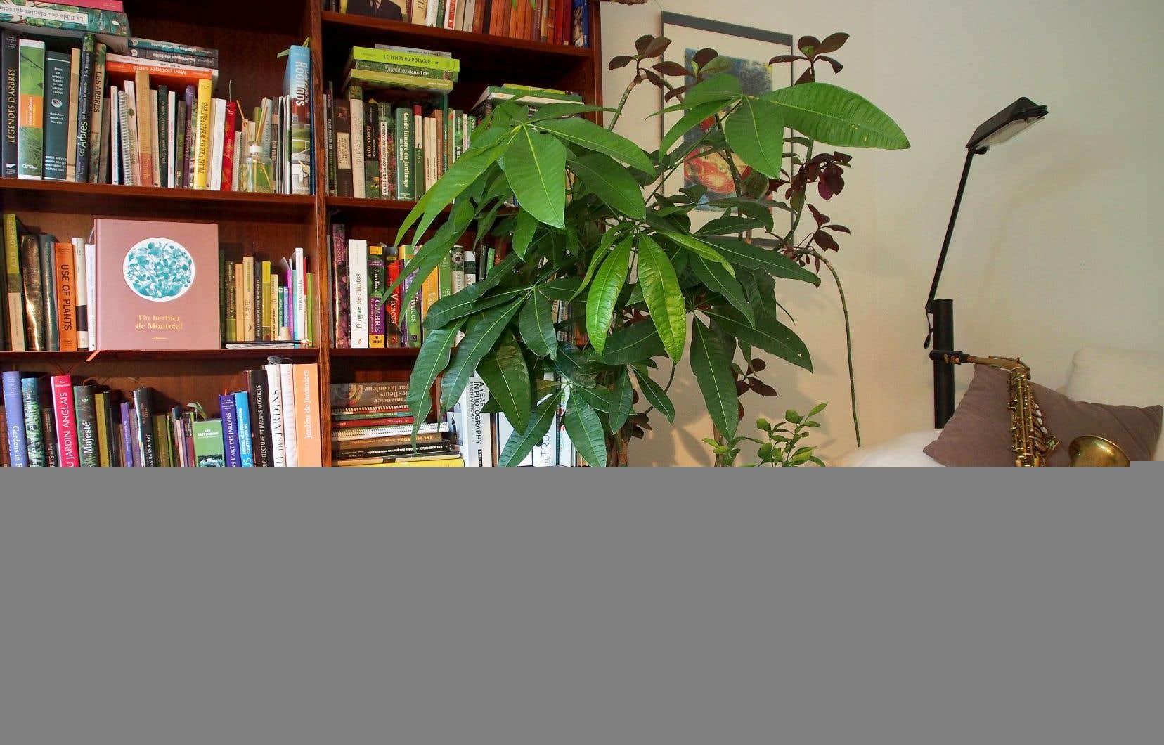 <p>En regroupant vos plantes en îlot de deux ou trois, dans les angles et près des murs, vous diminuerez l'écho dans une pièce.</p>