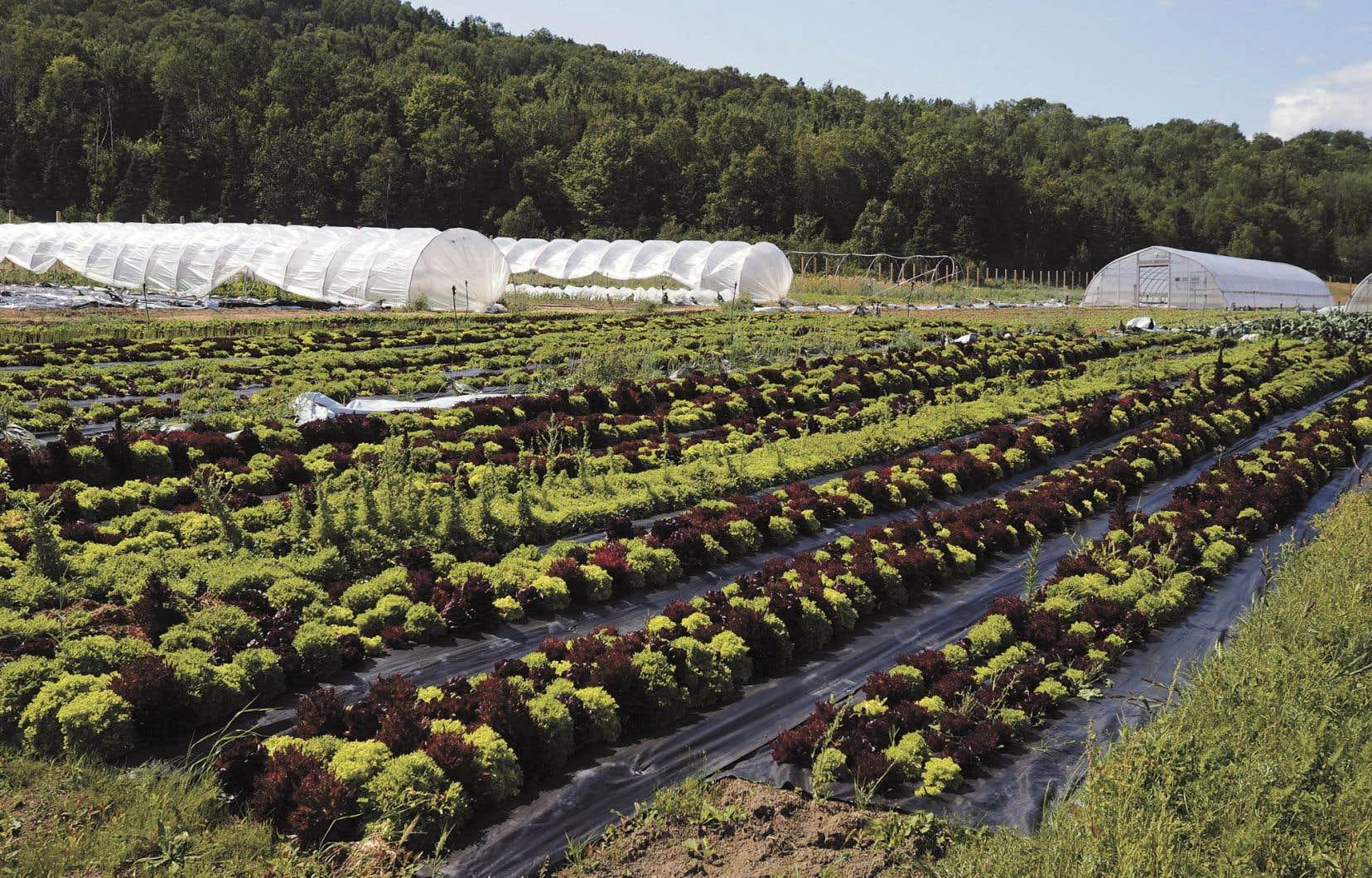 Dans l'industrie agricole, il y a certainement un mouvement qui pousse de plus en plus d'agriculteurs à réfléchir à l'avenir de l'alimentation et à faire des gestes concrets afin de freiner les dégâts de la production massive de monocultures.