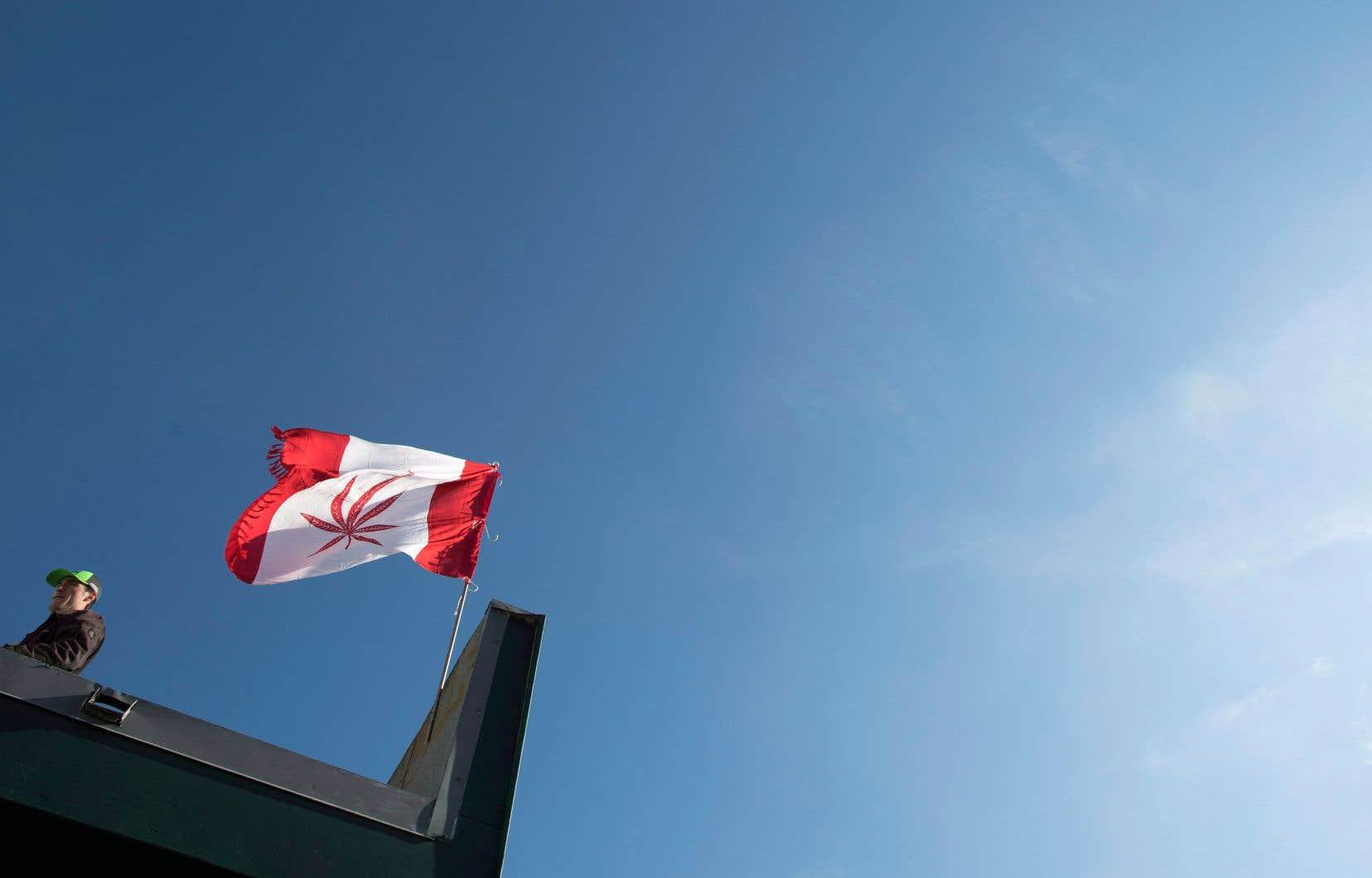 Jusqu'ici, 132 permis ont été délivrés par Santé Canada, des licences que se partagent 120 sociétés. Le Québec compte une dizaine de producteurs.