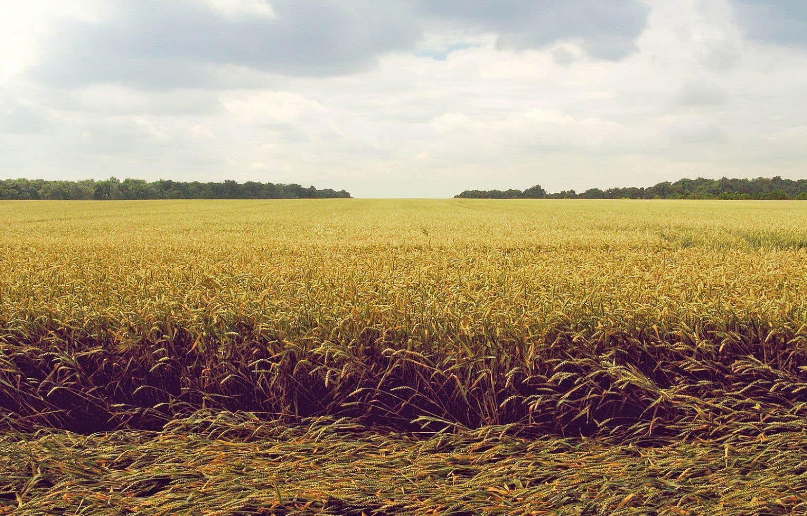 Depuis 2009, les dix entreprises les plus actives ont consacré plus de 68 millions de dollars à 136 acquisitions de terres agricoles.