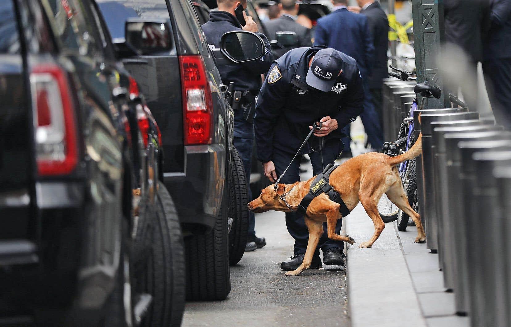 Un chien policier au travail près des bureaux de CNN à New York