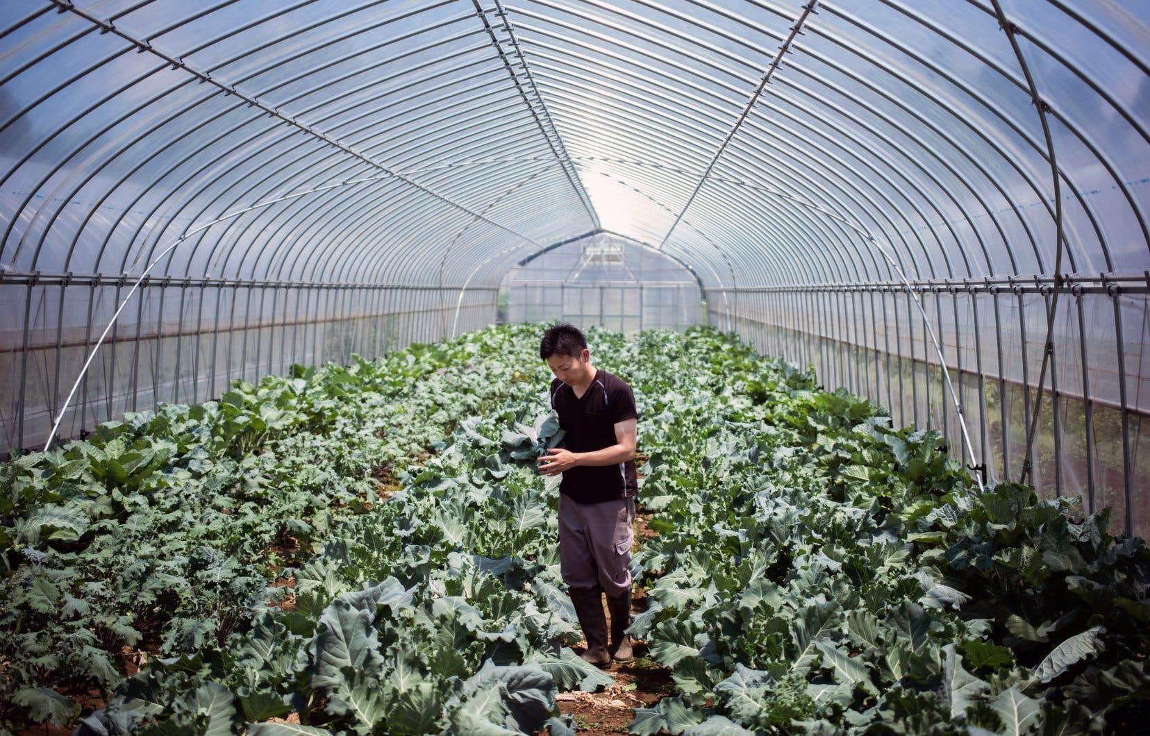 Yuya Shibakai cultive de la laitue, des tomates et des carottes dans sa ferme de légumes biologiques à Inzai, au Japon.