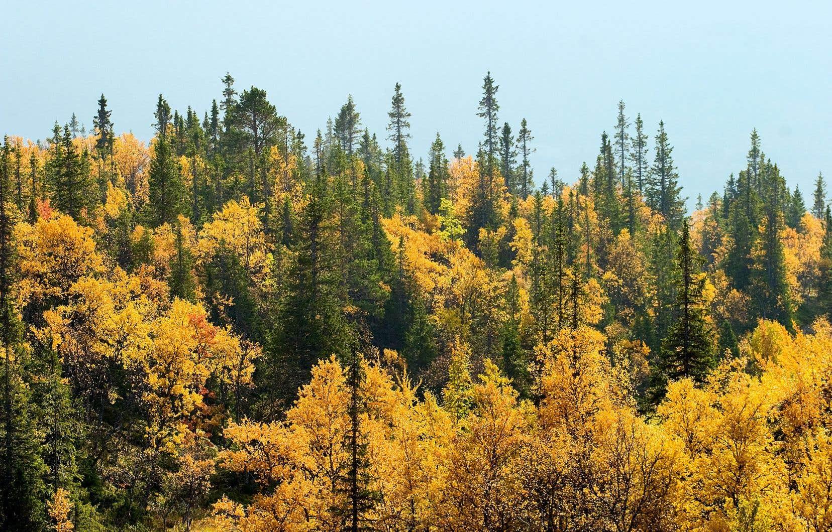 Le Collectif pour une forêt durable réunit 60 partenaires, dont des entreprises et des organisations syndicales.