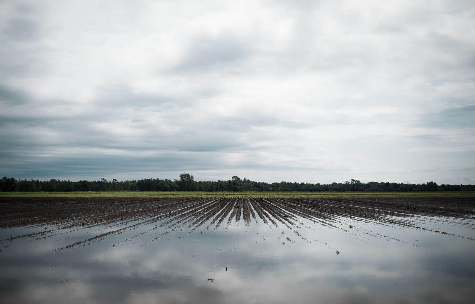 Des champs ont été ravagés par un orage violent à Napierville, en août 2017.