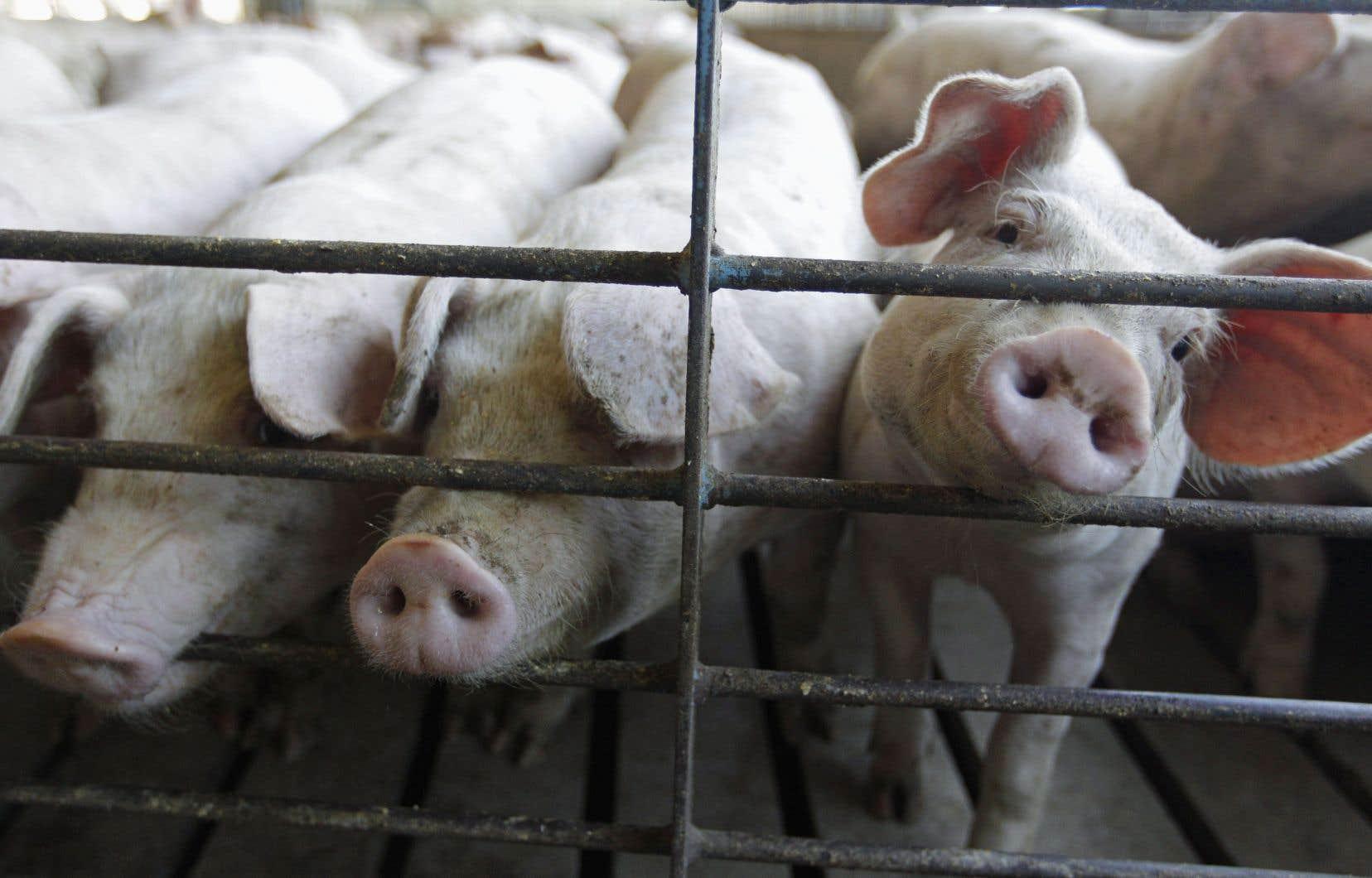 Ottawa fait miroiter une augmentation de 29% des exportations de porc, et de 36%, ou 639millions, au Japon seulement avec le Partenariat transpacifique global et progressiste.