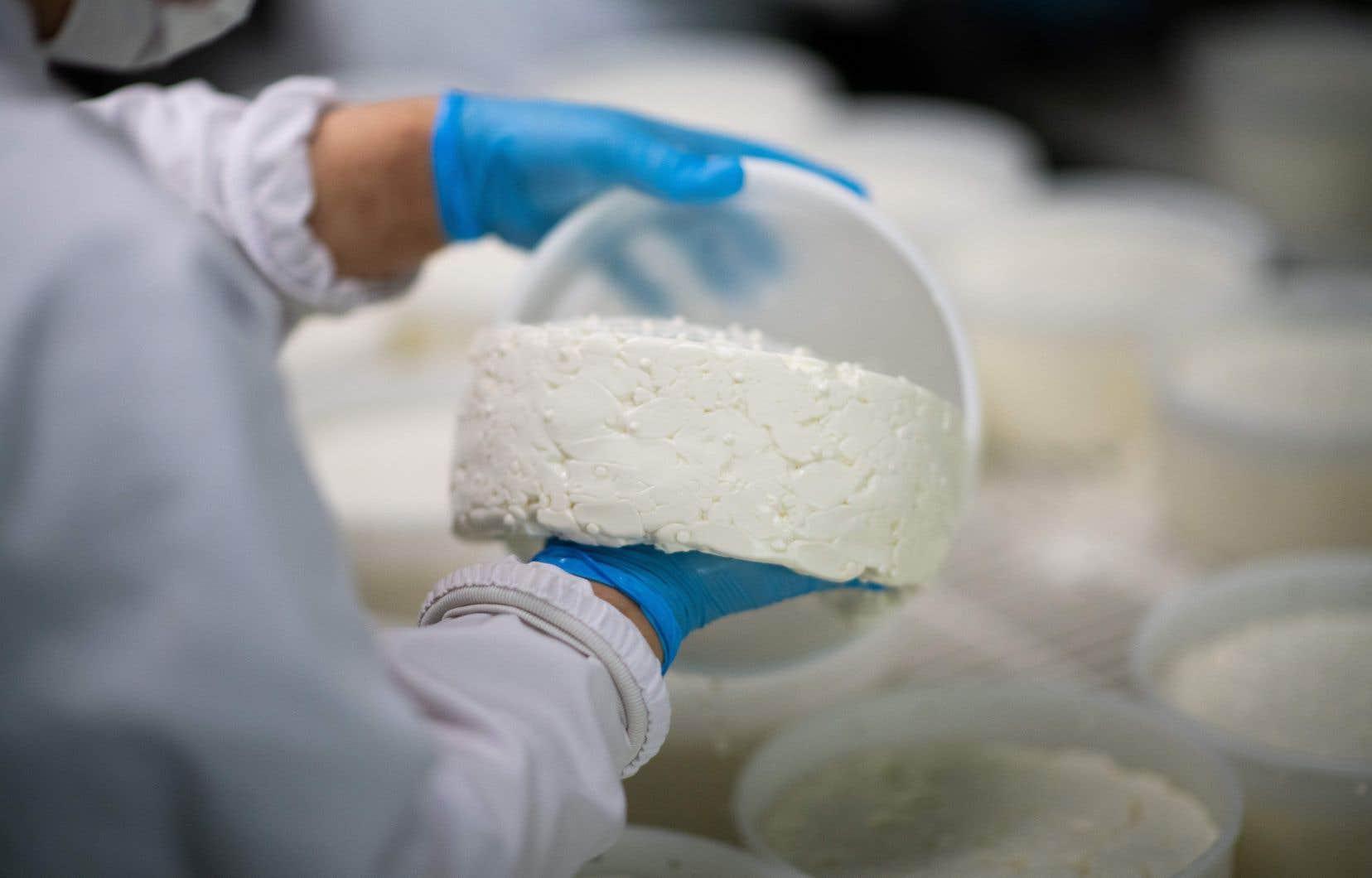 Les bactéries sont indispensables à la vie et ne sont pas toutes à exterminer. Par exemple, sans bactéries, pas de fromage. Mais ces bactéries ont des ennemis: des virus, dont le seul but est de les anéantir.