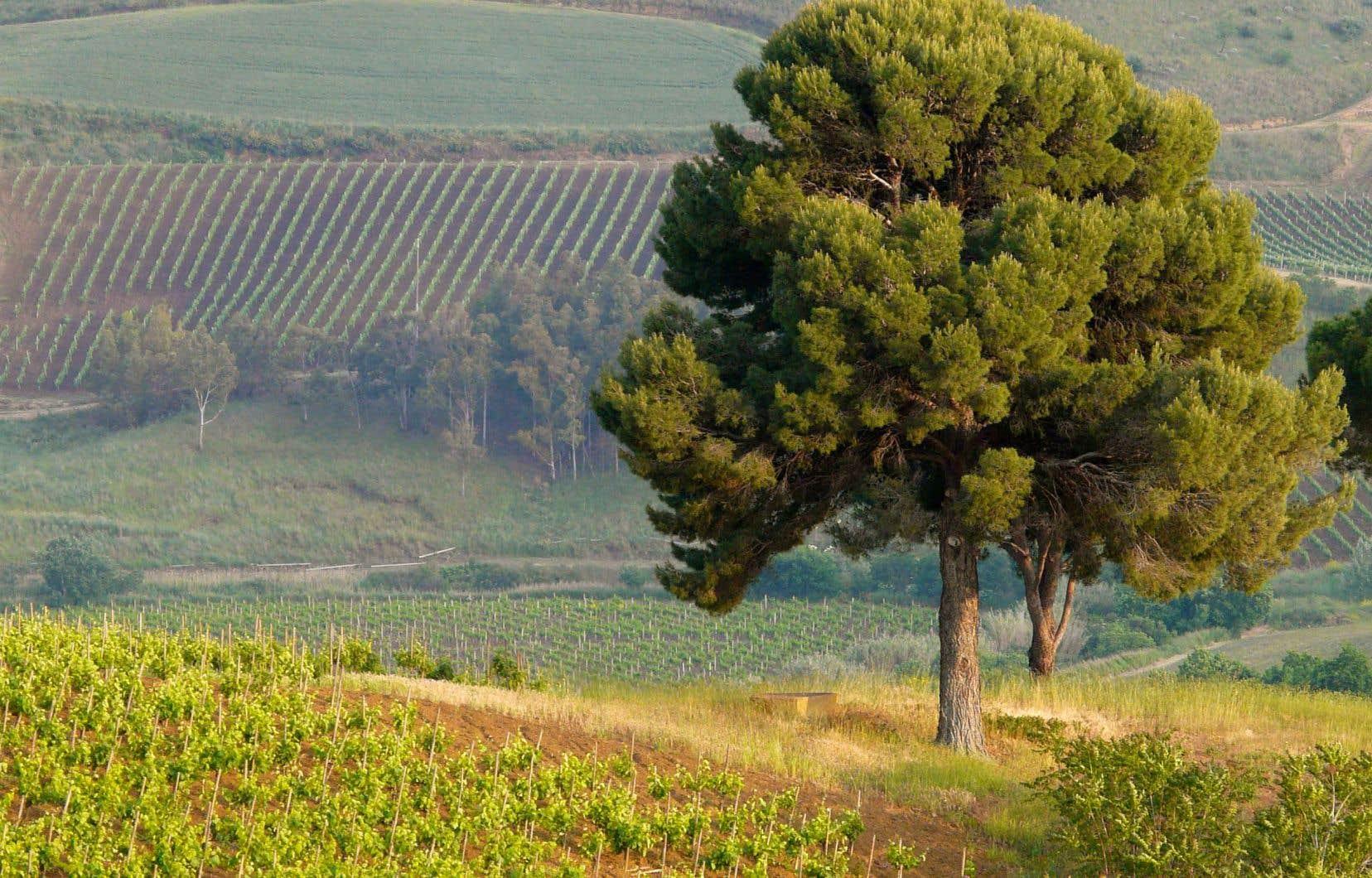 La Sicile intérieure: chaude, énigmatique, lumineuse