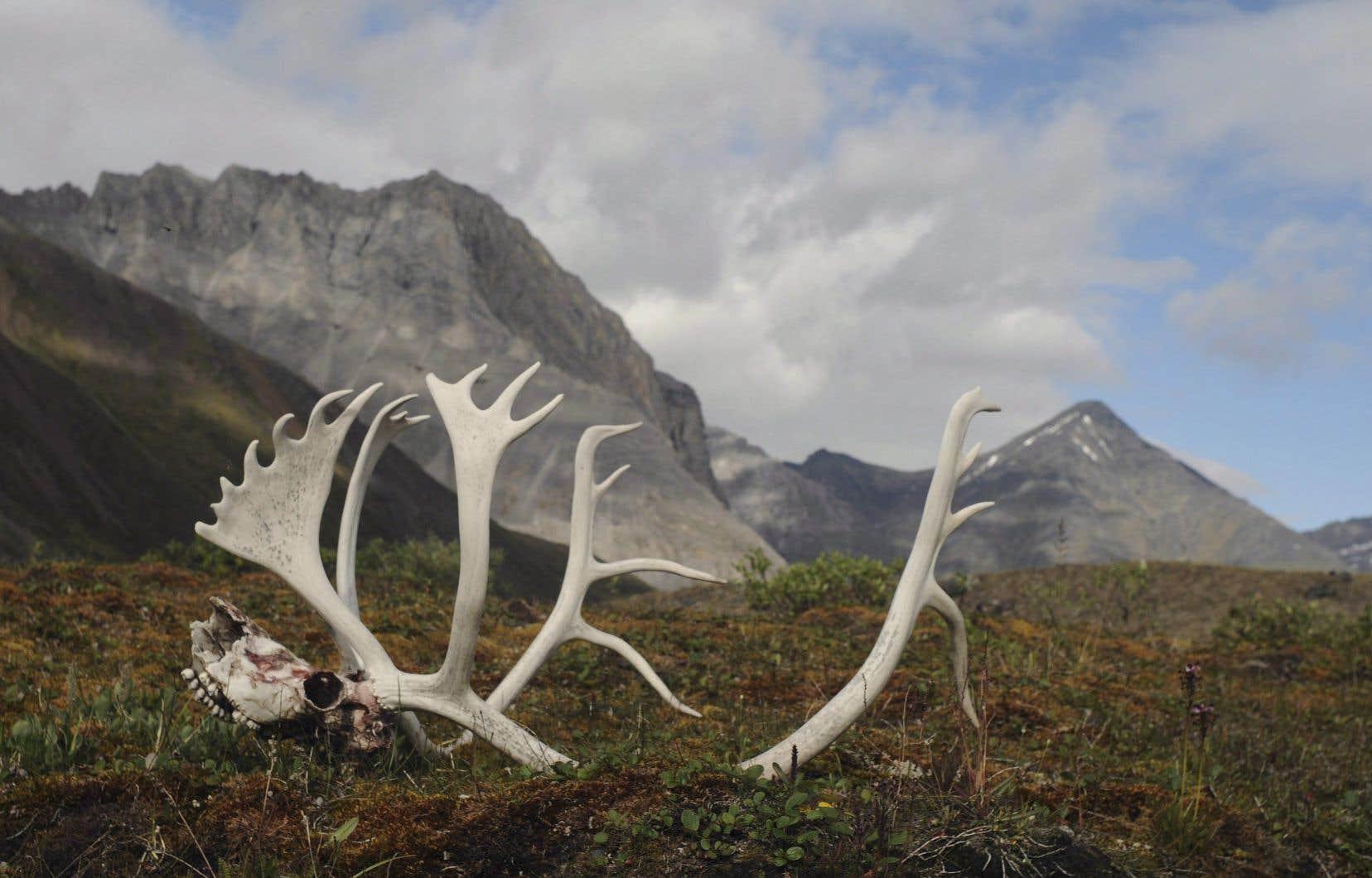 Au Canada seulement, les populations de mammifères ont chuté de 43% par rapport à la génération précédente.