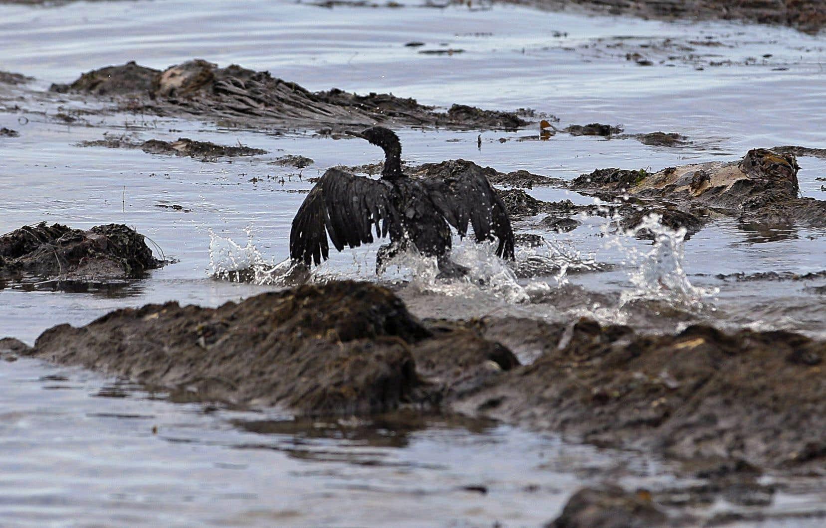 Cinq oiseaux de mer «mazoutés» ont été repérés et «un centre de désintoxication» pour animaux a été constitué.