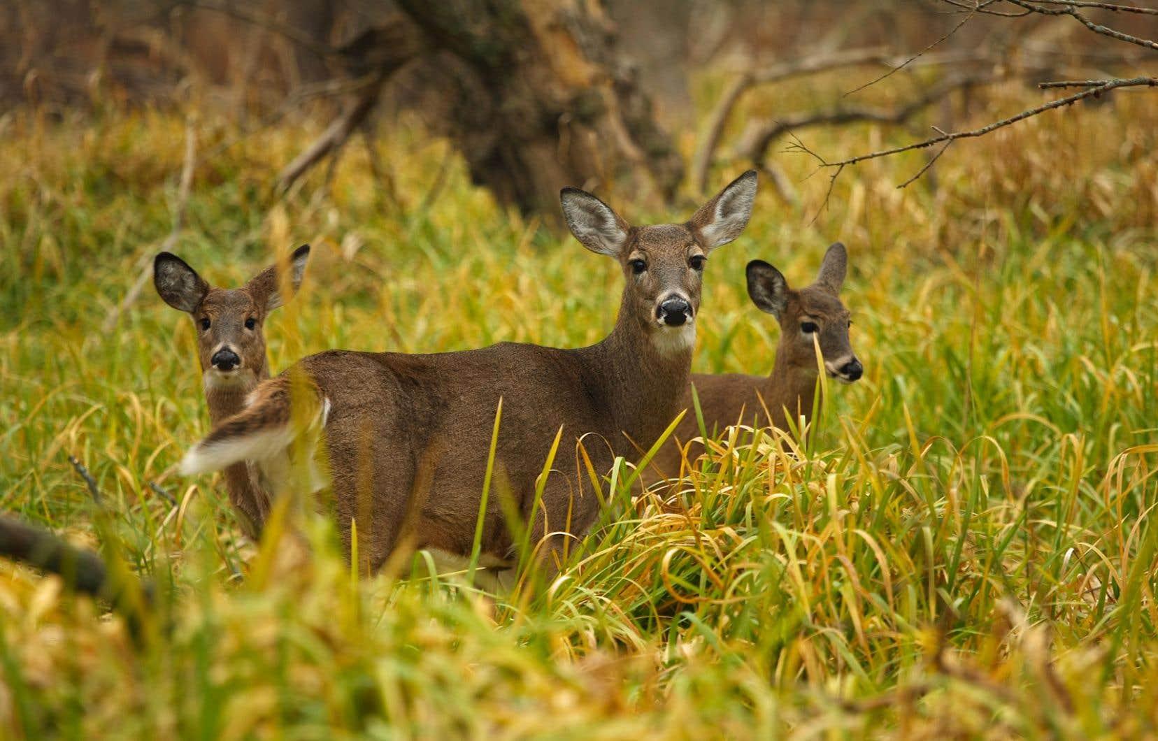 Le respect de l'écologie, de la biodiversité et de la faune fait partie du quotidien des 134000 propriétaires de forêts et de boisés privés du Québec.