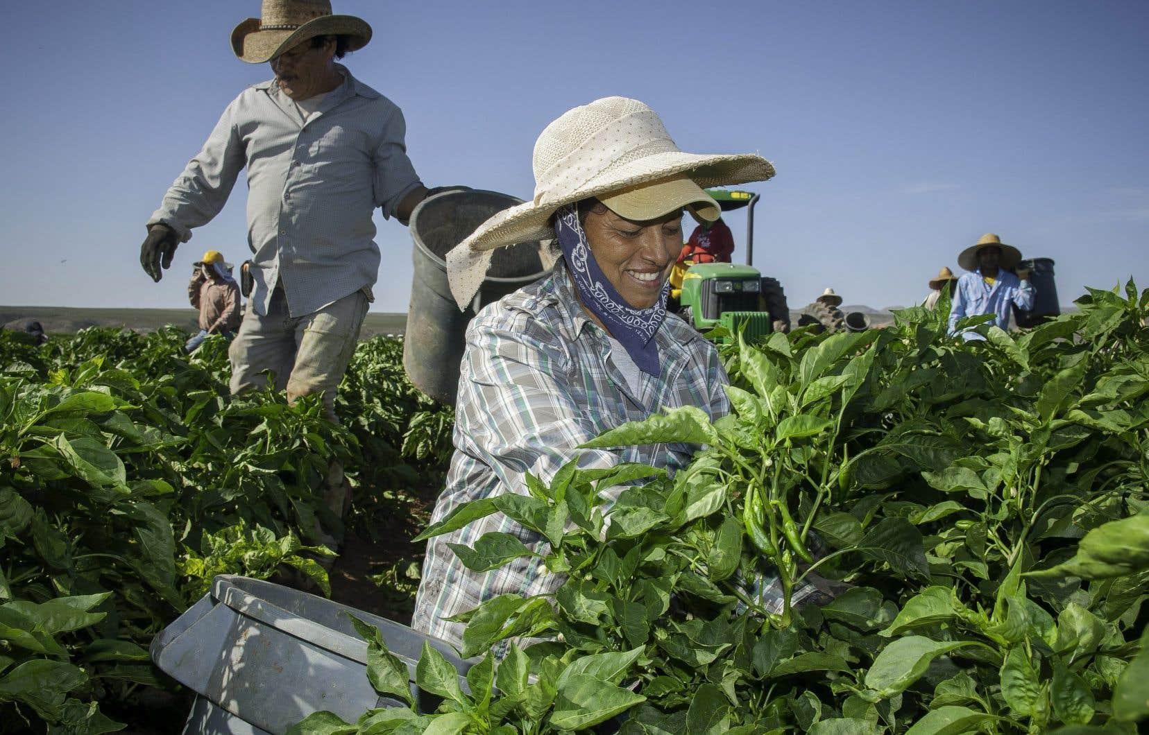 Des travailleurs étrangers temporaires
