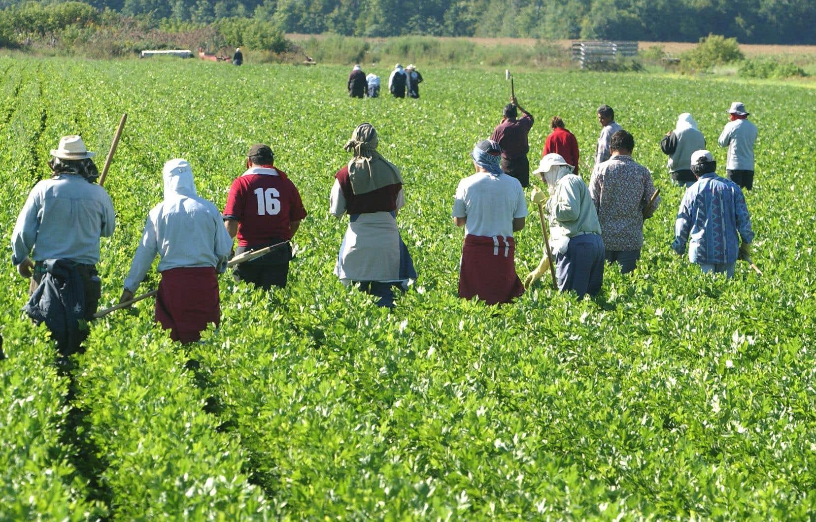 Les travailleurs étrangers temporaires seraient utiles aussi bien dans les secteurs habituels, comme l'agroalimentaire et l'hôtellerie, que dans ceux de la fabrication et de l'intelligence artificielle.