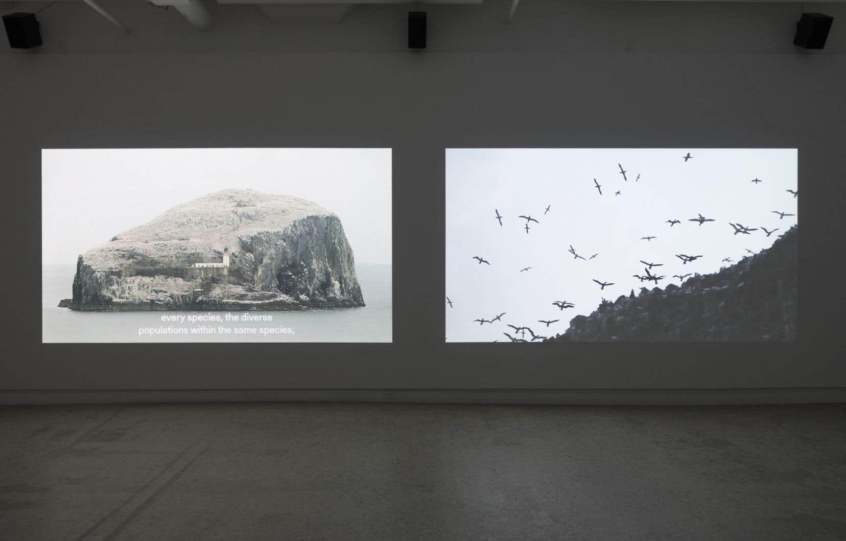 Vue de l'installation vidéo <em>Bord d'attaque/Bord de fuite</em>, 2018, deGeneviève Chevalier