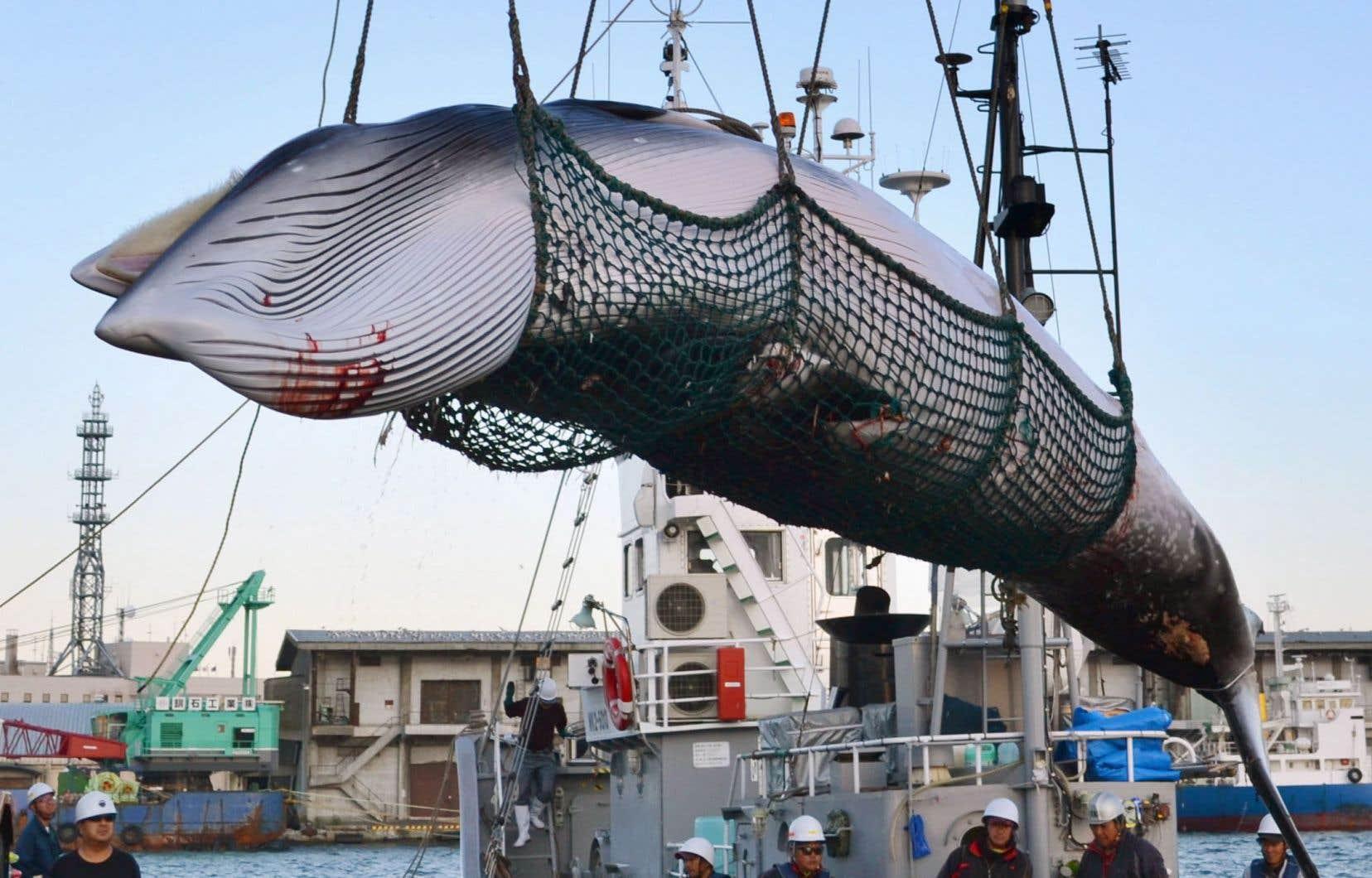 Le gouvernement nippon entend «reprendre la pêche commerciale en juillet prochain».