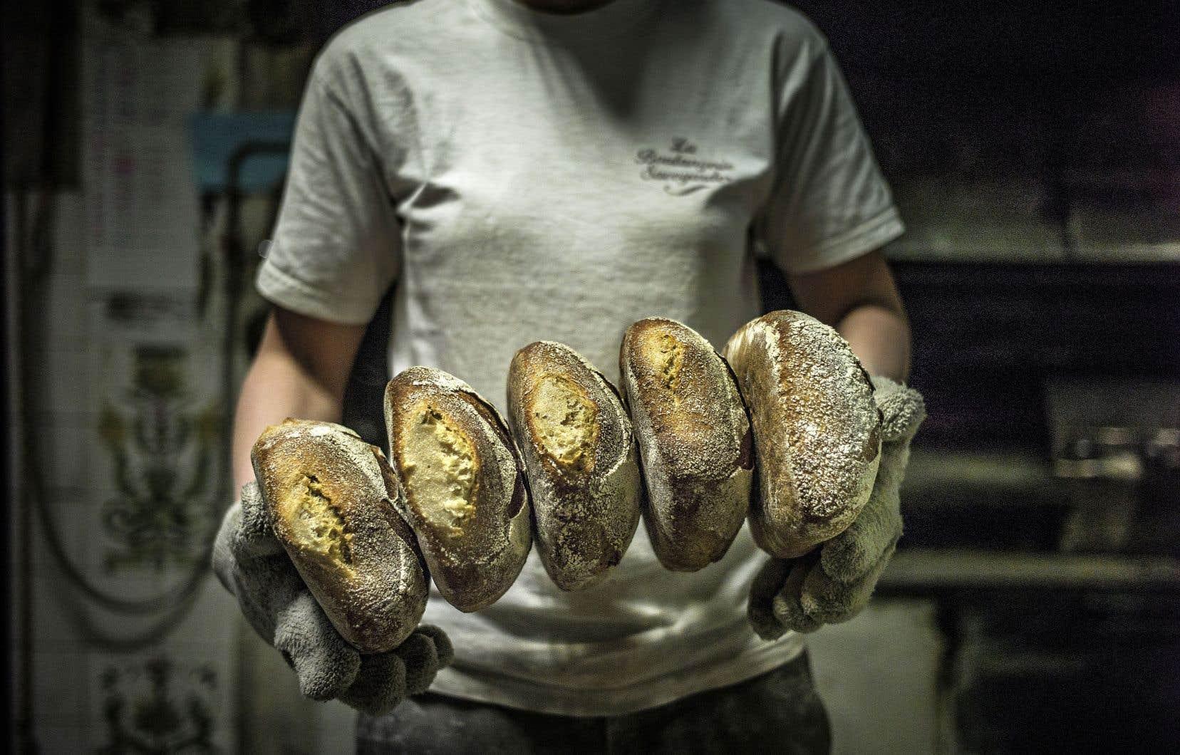 Des boulangers utilisent des blés «d'exception», comme le khorasan. Il s'agit de variétés «paysannes» qui avaient été abandonnées après la guerre pour pallier les insuffisances de la production céréalière, l'agriculture privilégiant le rendement.